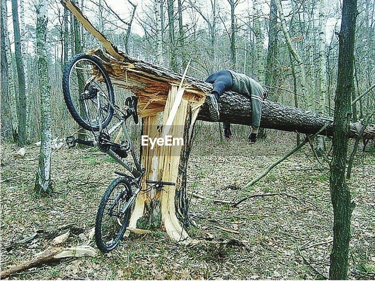 tree, bicycle, no people, outdoors, day, transportation, tree trunk, stationary, nature