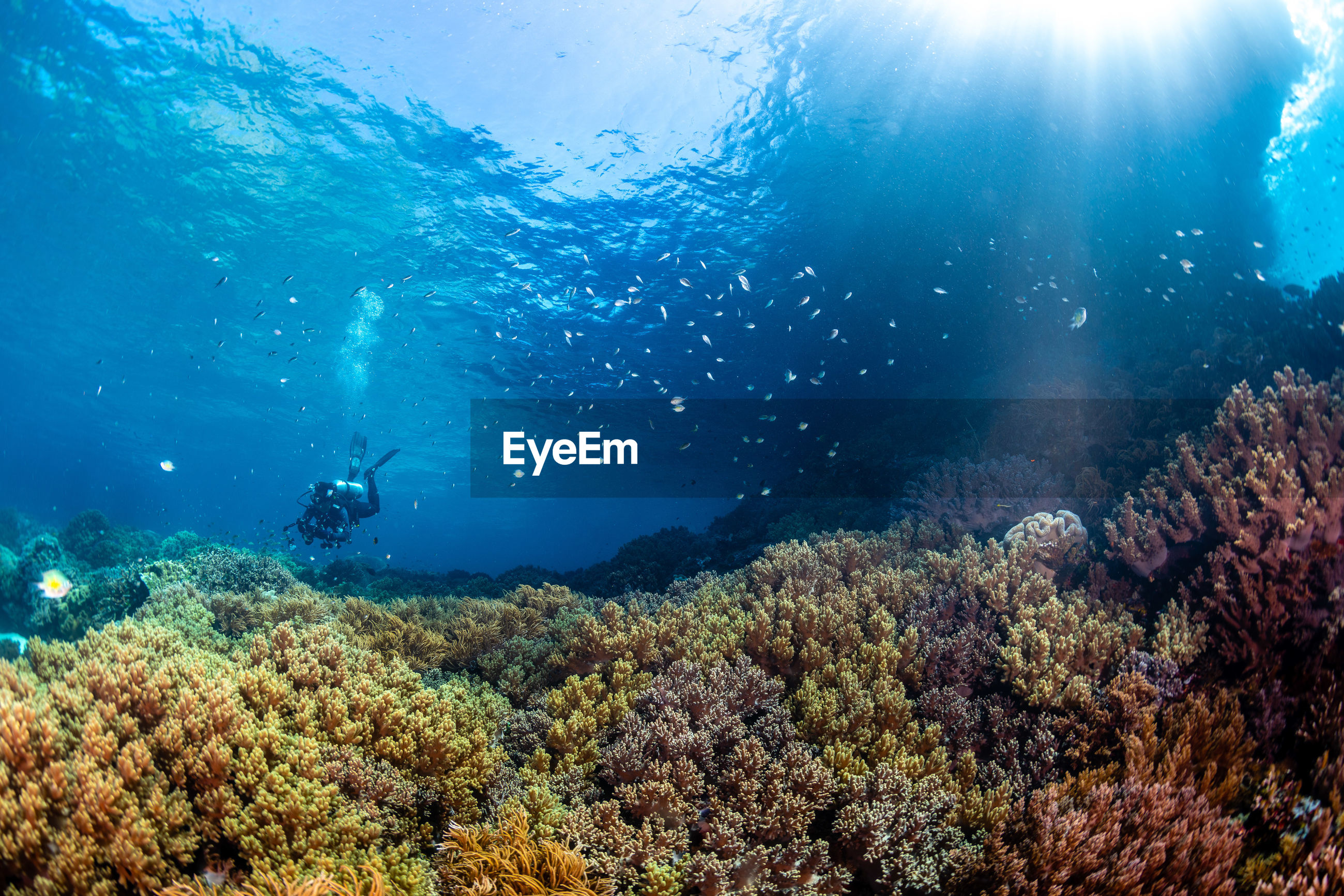 SCENIC VIEW OF SEA AND FISH SWIMMING