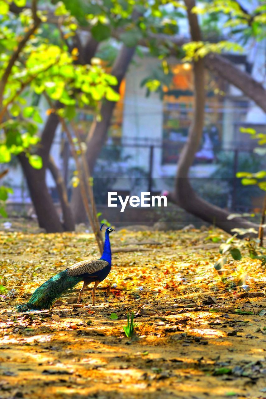 plant part, leaf, animal, animal themes, one animal, nature, animal wildlife, bird, day, vertebrate, animals in the wild, tree, plant, autumn, no people, focus on foreground, change, outdoors, selective focus, park, leaves