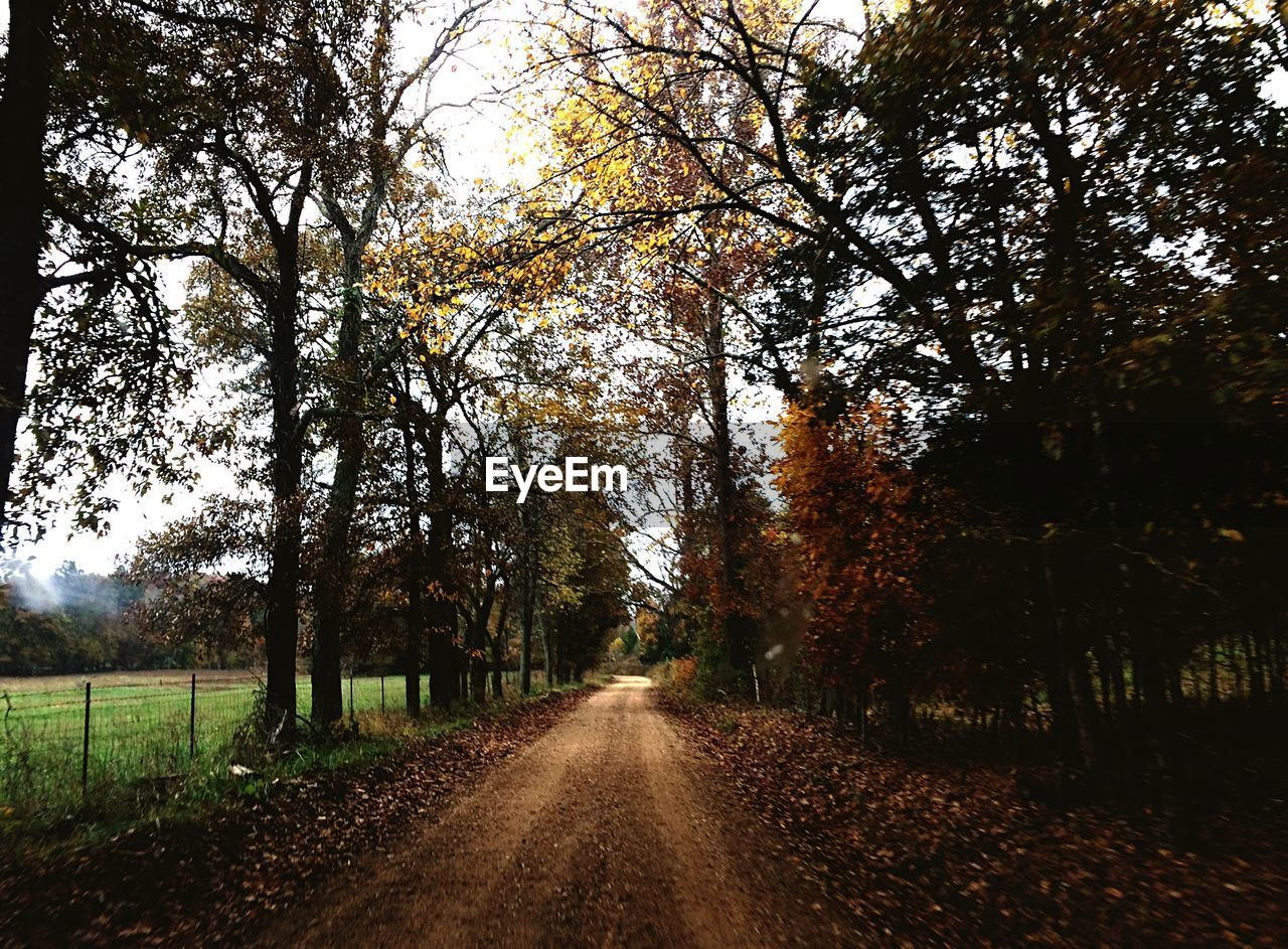 tree, autumn, the way forward, nature, diminishing perspective, tranquility, change, beauty in nature, scenics, tranquil scene, outdoors, no people, day, growth, landscape, road, leaf, forest, branch, sky