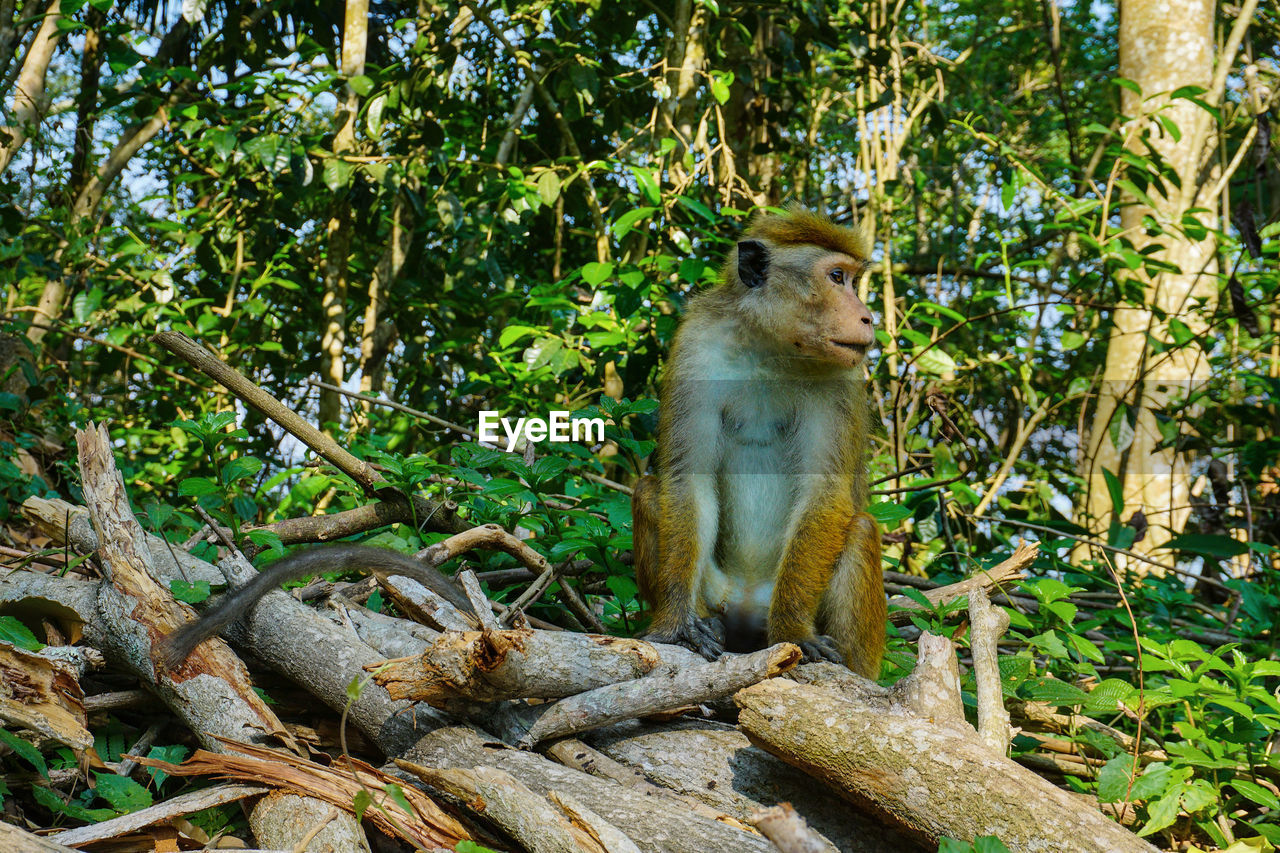 VIEW OF MONKEY SITTING ON TREE TRUNK