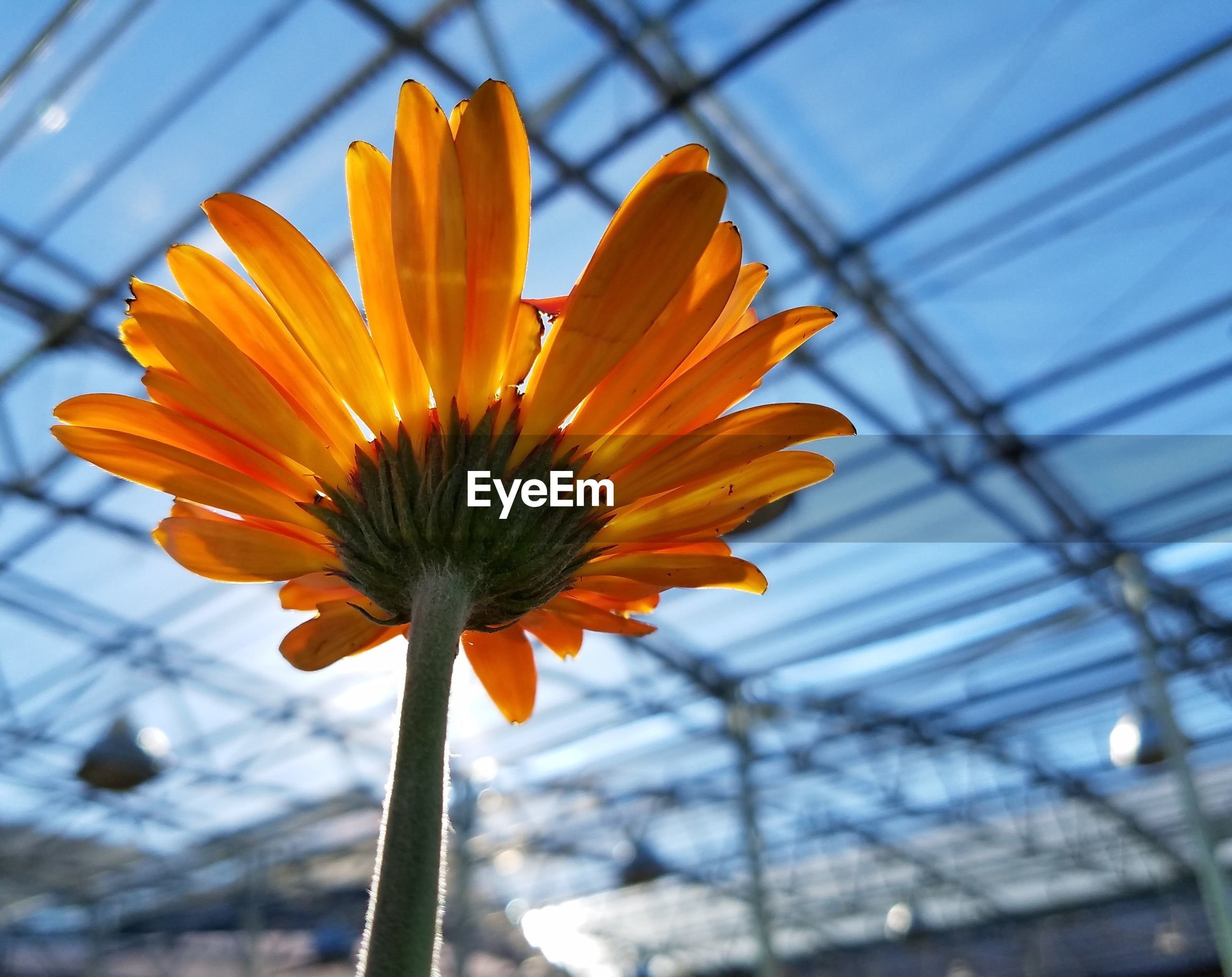 LOW ANGLE VIEW OF YELLOW FLOWER AGAINST SKY