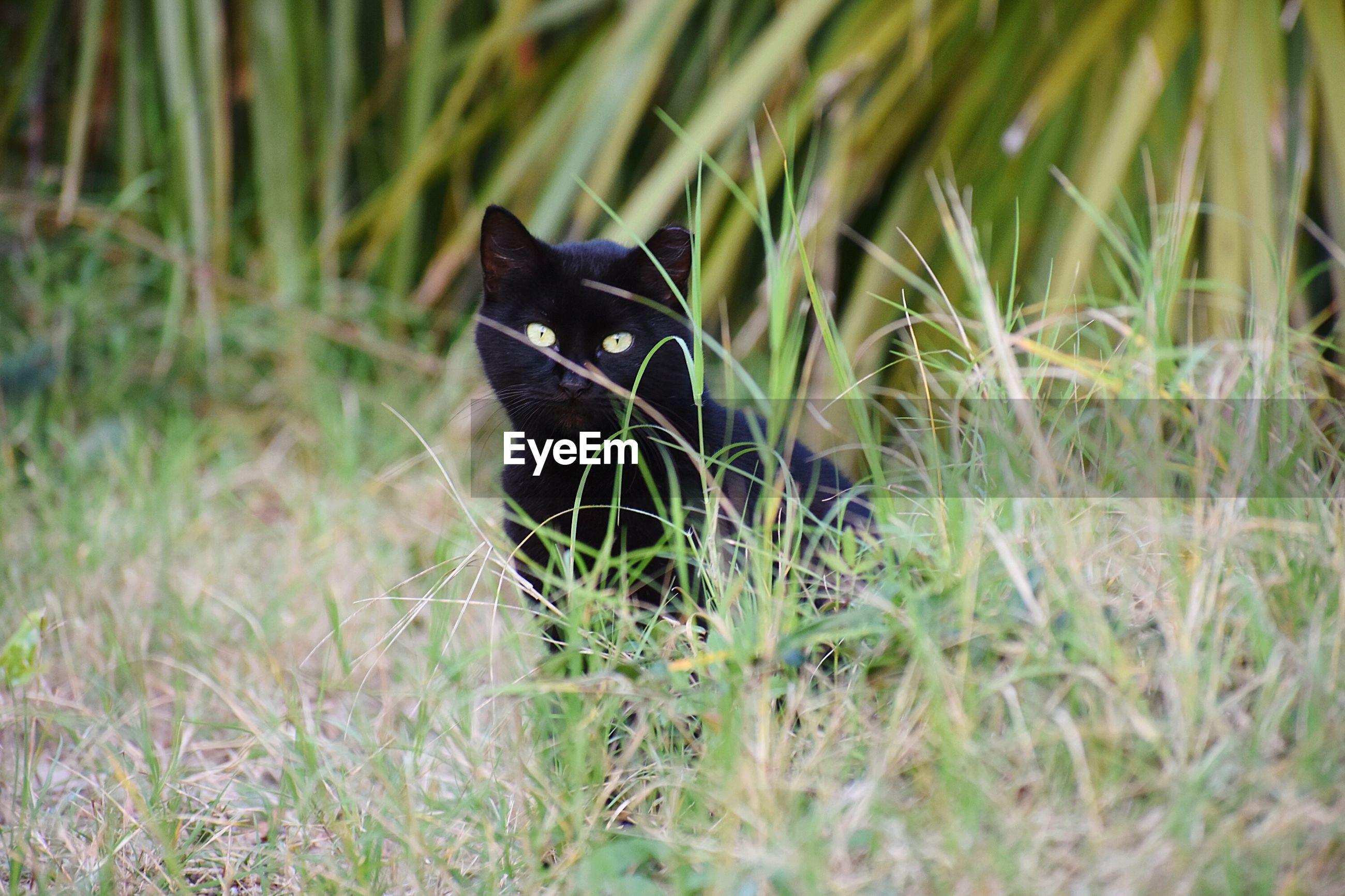CAT ON GRASS FIELD