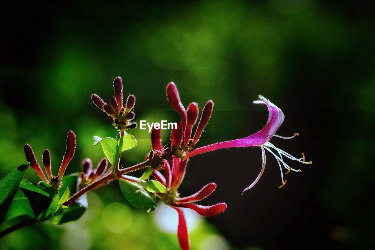 plant, growth, beauty in nature, close-up, vulnerability, no people, flower, fragility, nature, selective focus, day, flowering plant, freshness, green color, focus on foreground, outdoors, leaf, plant part, beginnings, bud