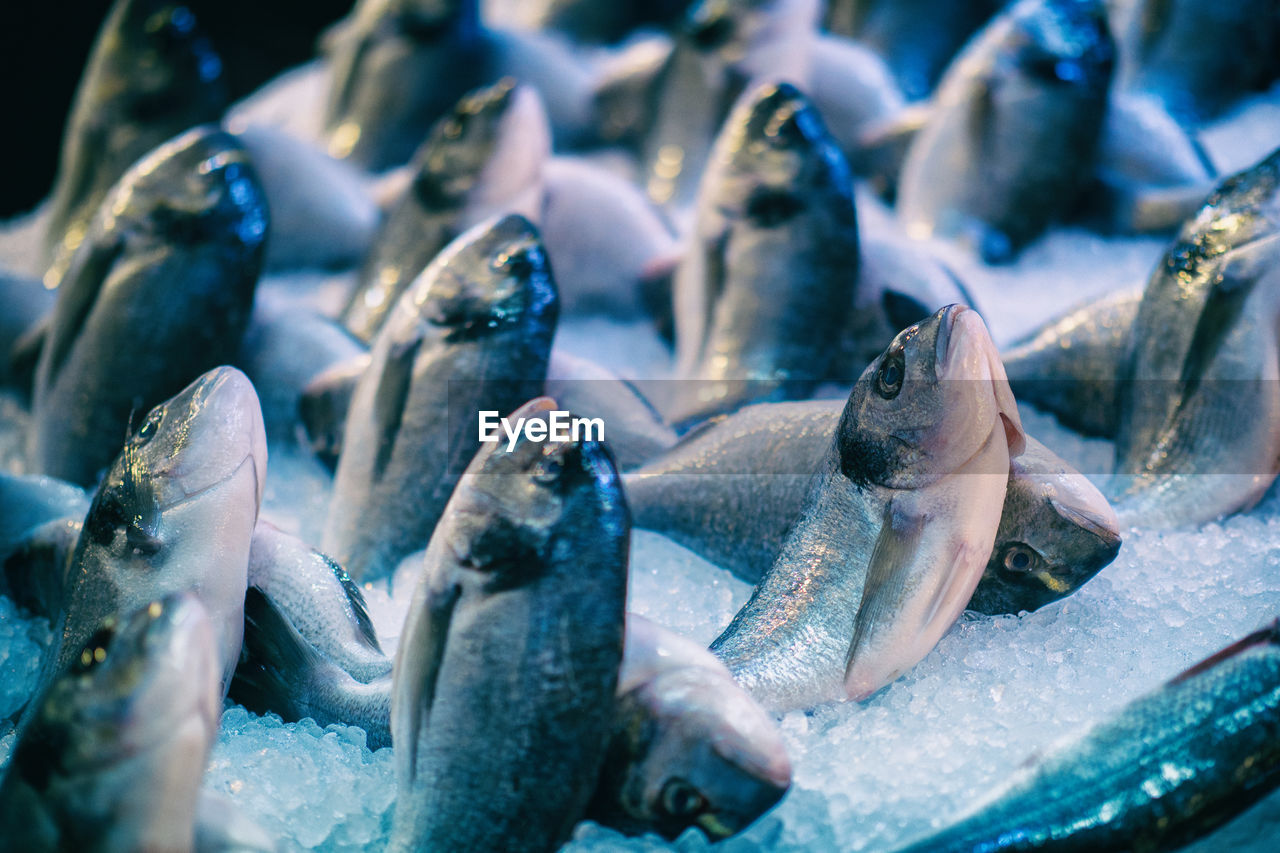 fish, vertebrate, animal, group of animals, no people, food, for sale, food and drink, retail, seafood, animal themes, close-up, nature, selective focus, wellbeing, animal wildlife, freshness, water, market, outdoors, fishing industry