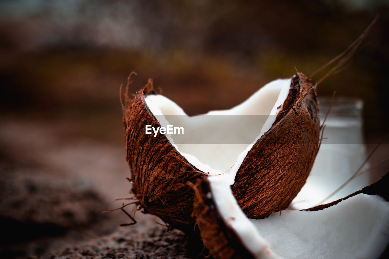 close-up, no people, focus on foreground, dry, brown, selective focus, nature, white color, beauty in nature, food and drink, vulnerability, day, fragility, plant, leaf, food, plant part, freshness, still life, field, dried, flower