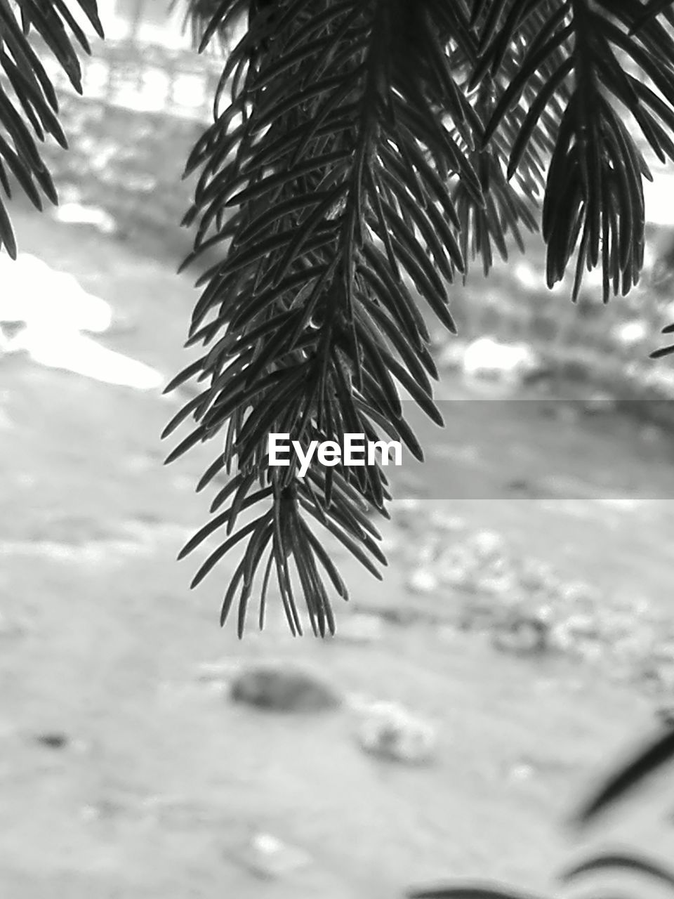 no people, close-up, tree, day, nature, palm tree, beauty in nature, cold temperature, winter, indoors, freshness, sky