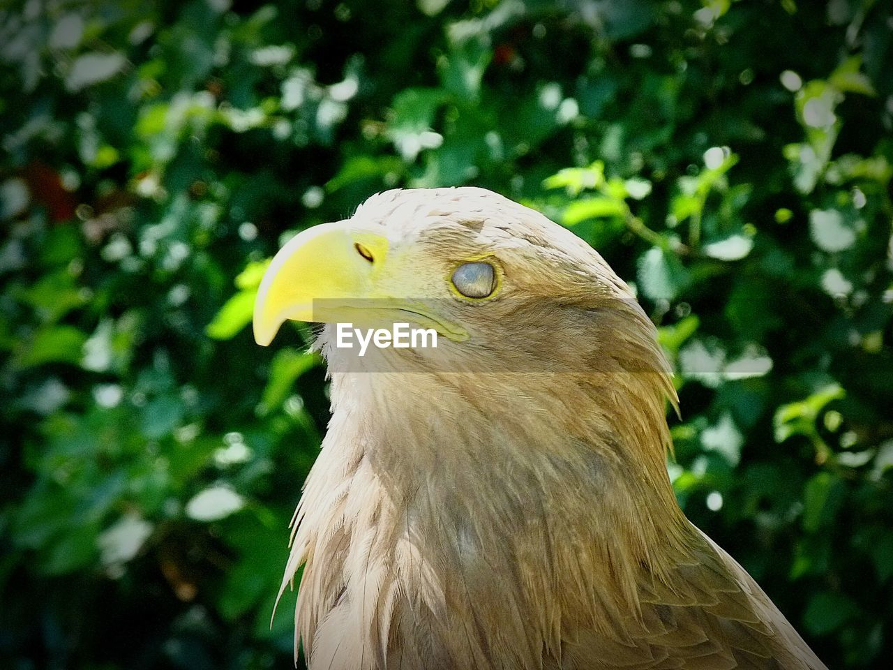 Close-Up Of Eagle Against Plants