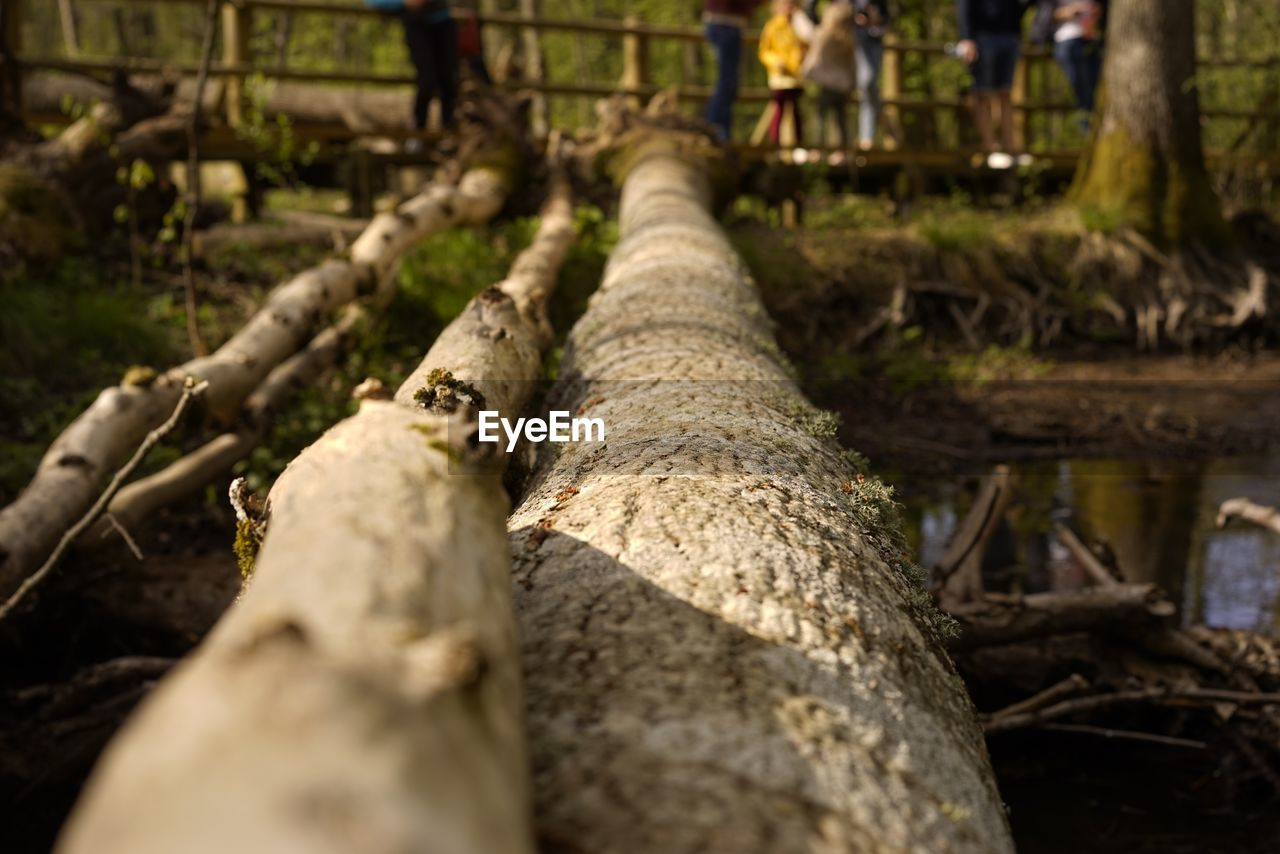 selective focus, day, nature, tree, outdoors, human body part, wood - material, plant, real people, close-up, land, human leg, body part, field, low section, architecture, people, metal, old