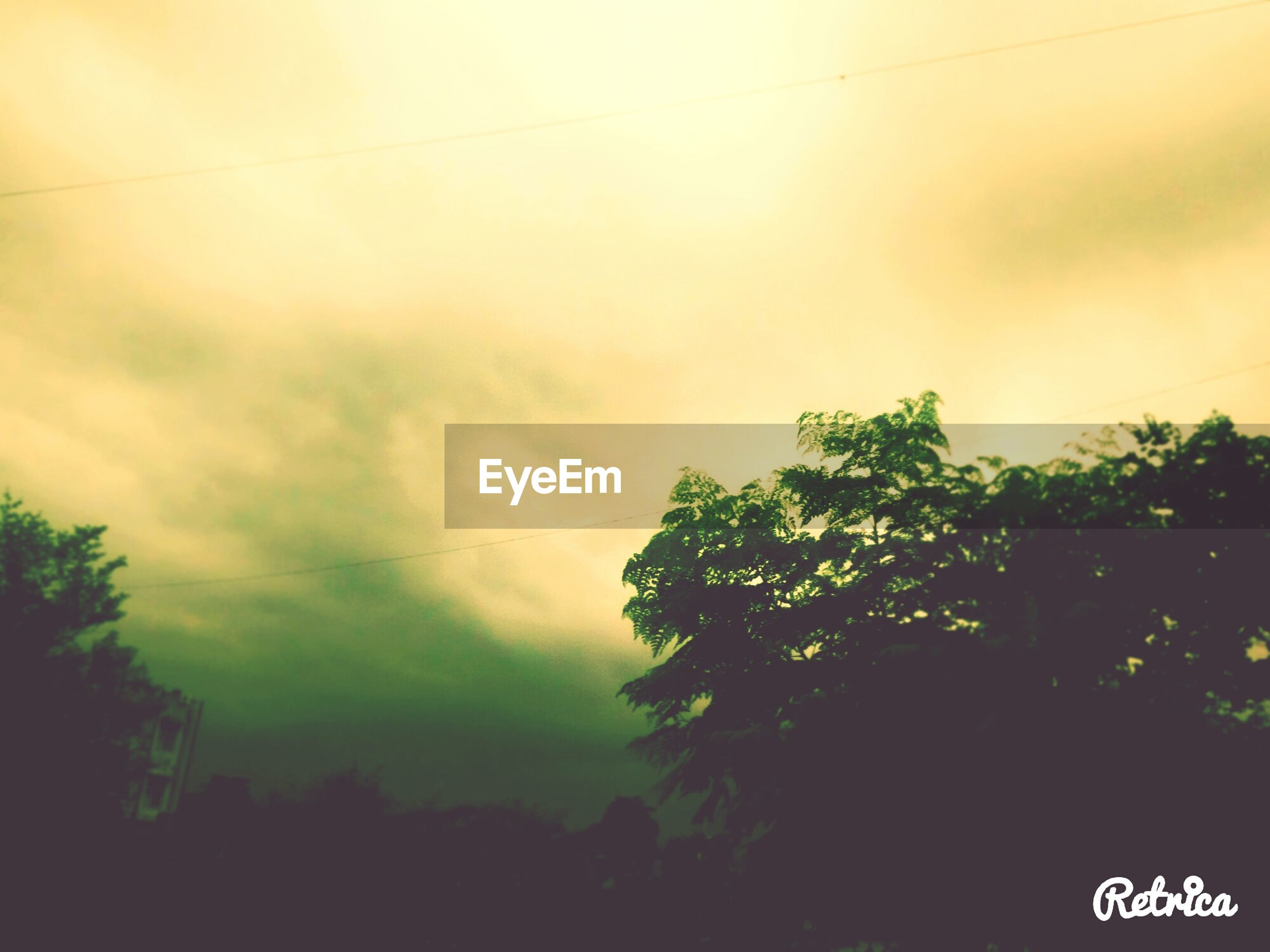 tree, sky, low angle view, silhouette, nature, cloud - sky, power line, growth, tranquility, beauty in nature, cloudy, scenics, outdoors, tranquil scene, no people, day, cloud, cable, weather, dusk