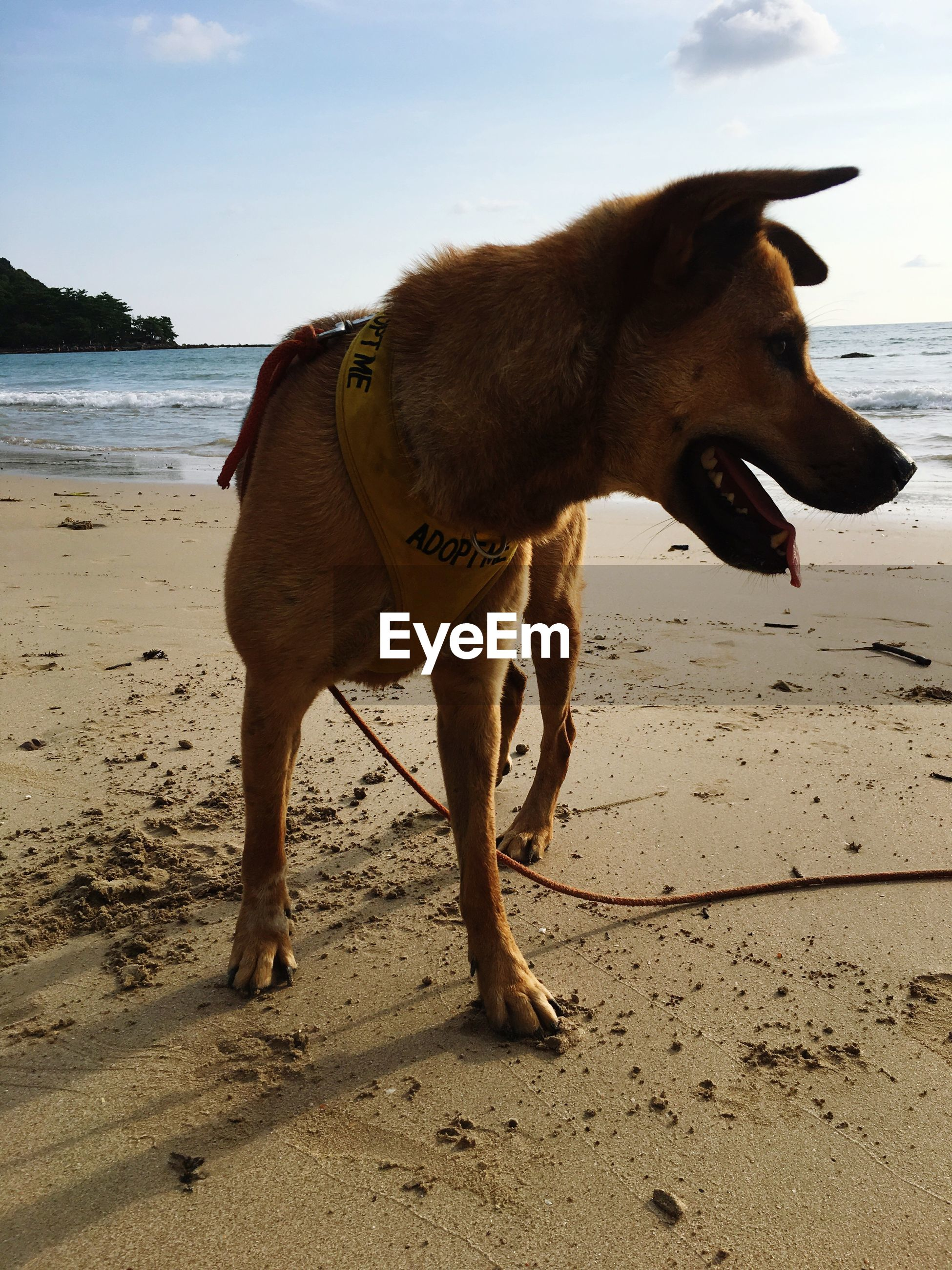 Close-up of dog standing on beach against sky