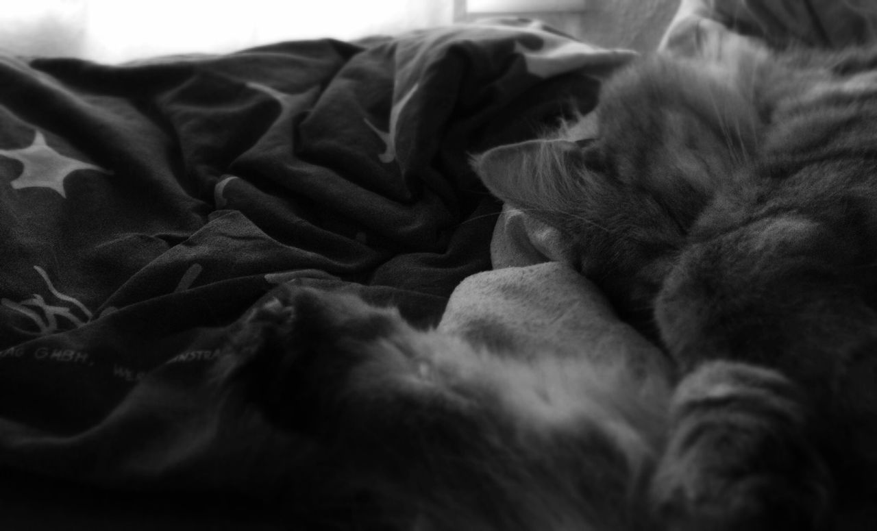 Cropped image of cat sleeping by blanket on bed