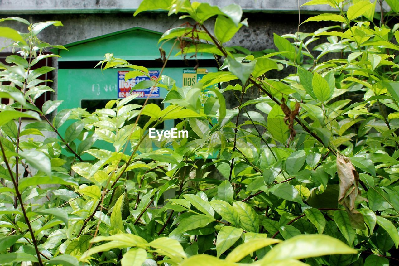 leaf, green color, plant, growth, communication, no people, day, low angle view, outdoors, ivy, banana tree, nature, tree, close-up