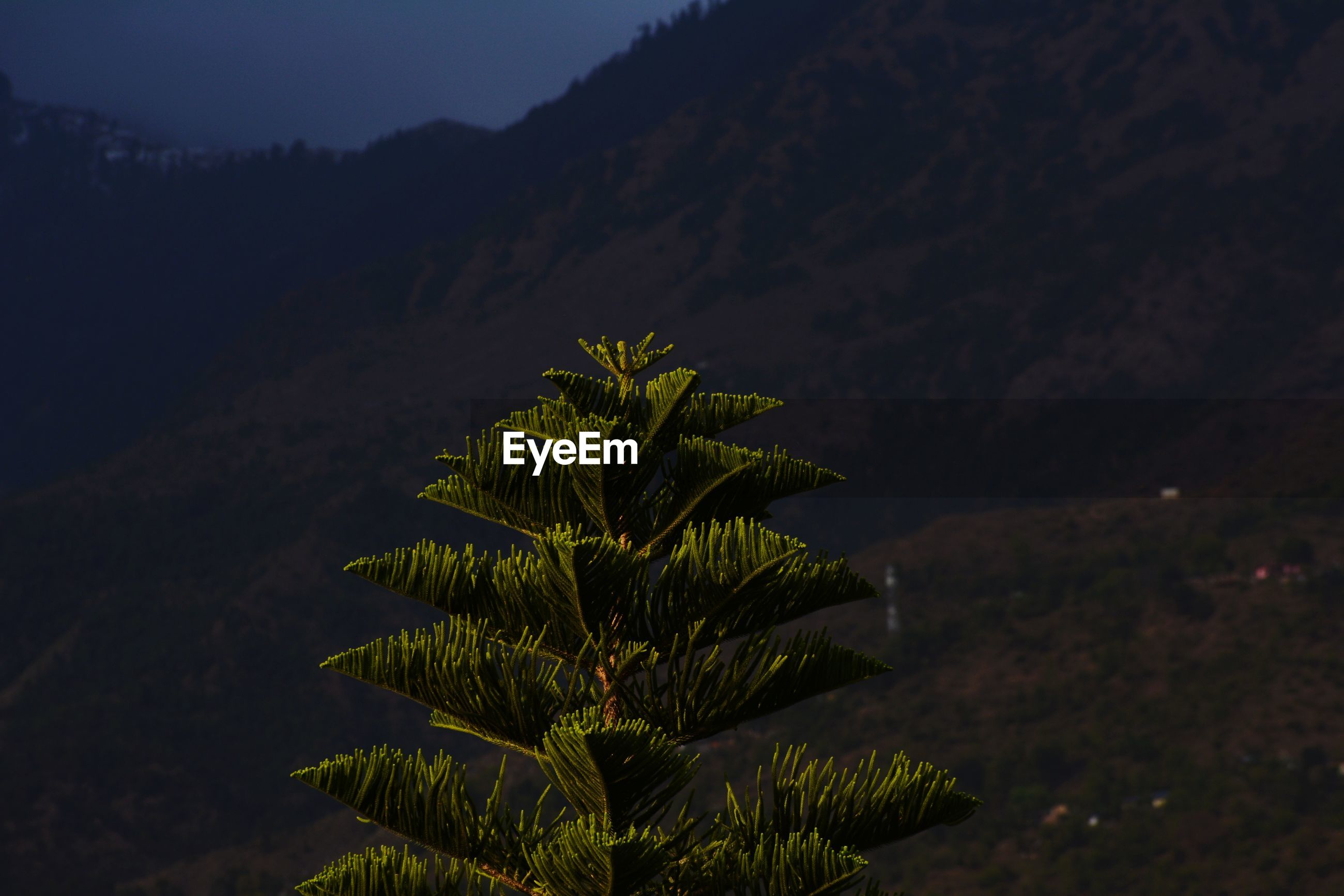 HIGH ANGLE VIEW OF PLANT ON MOUNTAIN