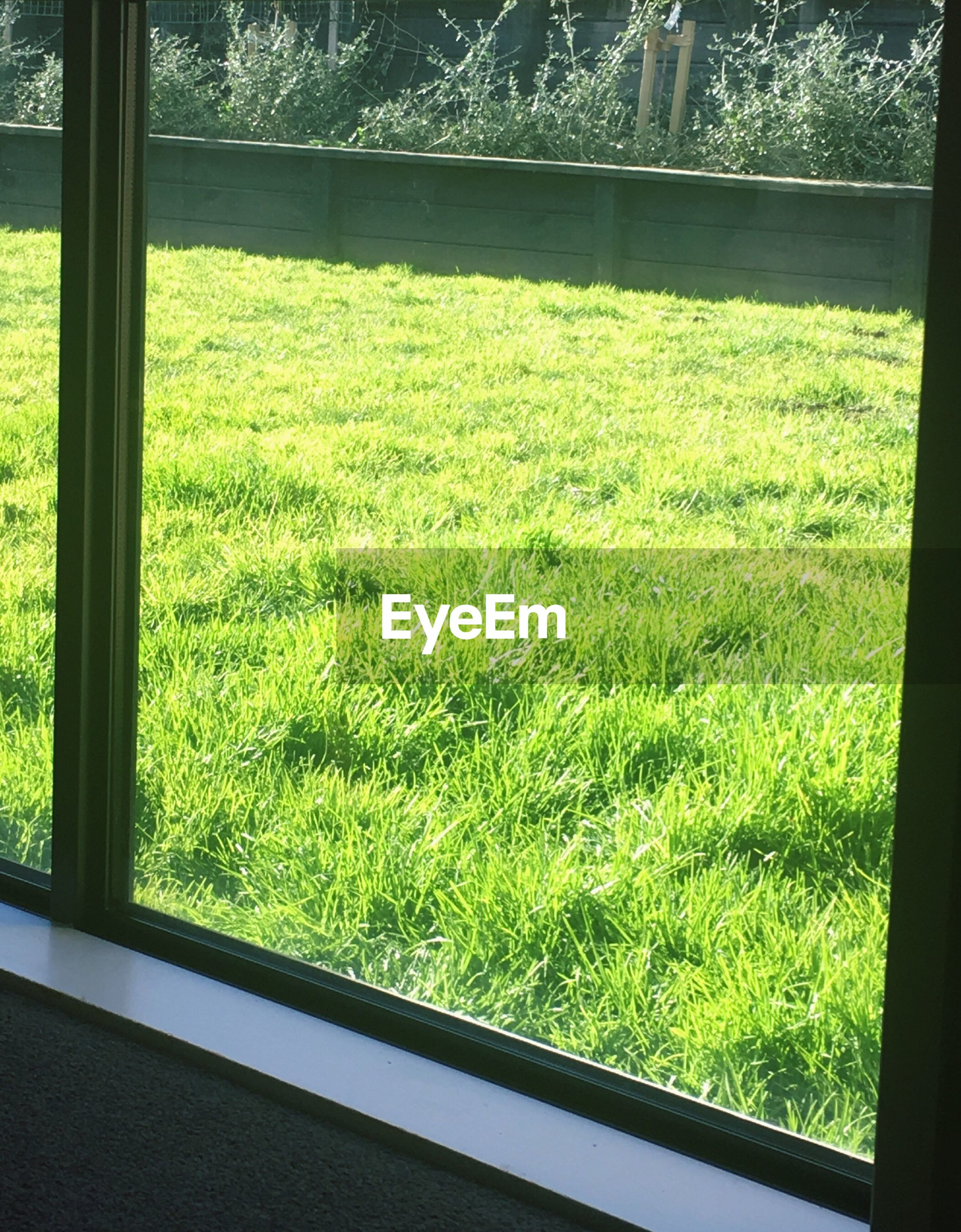 grass, green color, window, growth, tree, grassy, plant, close-up, day, water, lawn, nature, green, grassland, freshness, growing, grass area, lush foliage, uncultivated, tranquility, wildflower, garden, no people