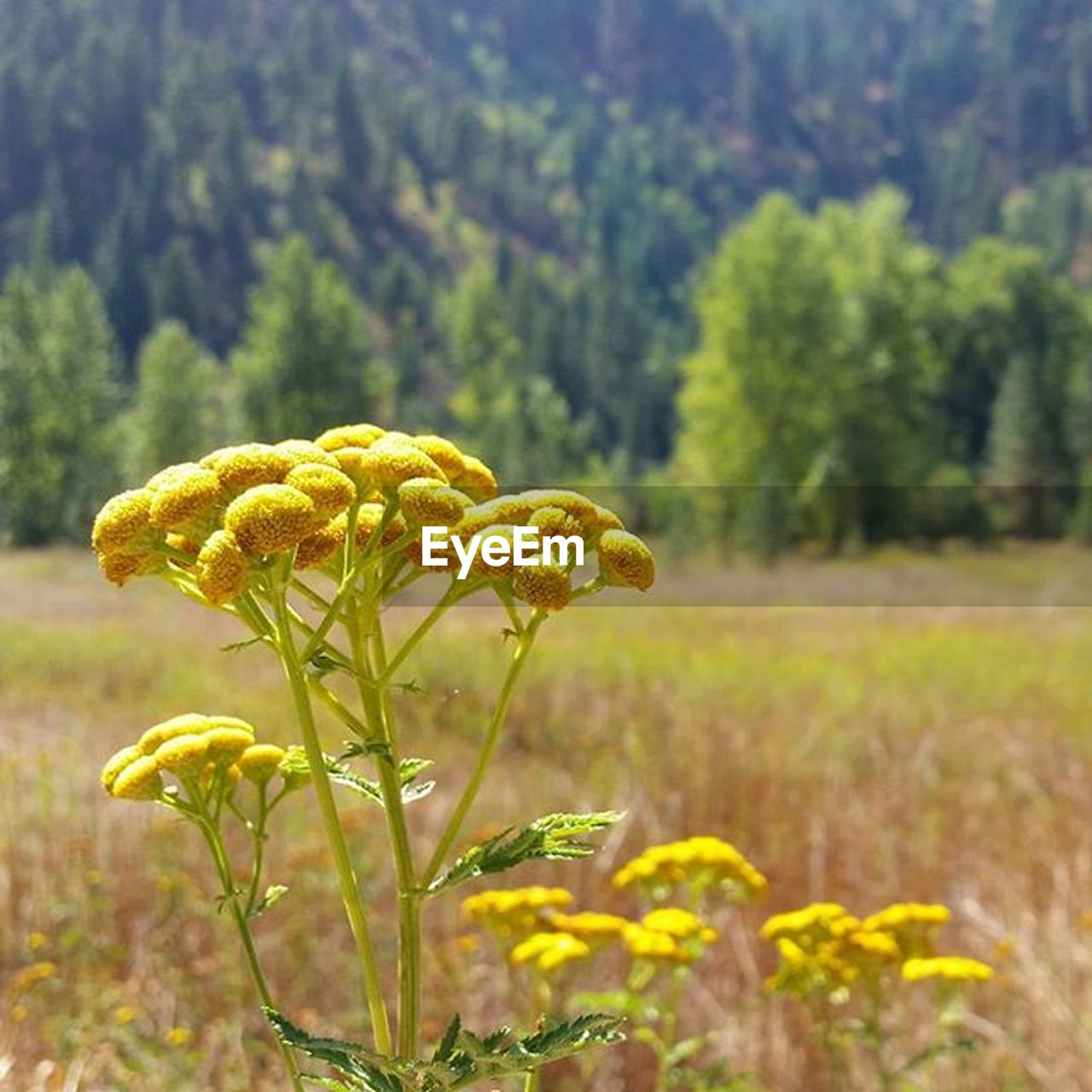 flower, growth, nature, plant, fragility, beauty in nature, outdoors, yellow, focus on foreground, field, no people, petal, day, freshness, flower head, close-up