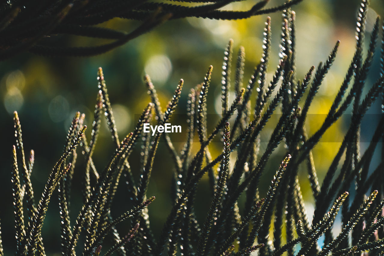 growth, close-up, plant, no people, beauty in nature, focus on foreground, nature, day, selective focus, green color, pattern, fragility, drop, wet, outdoors, water, sunlight, vulnerability, freshness, dew