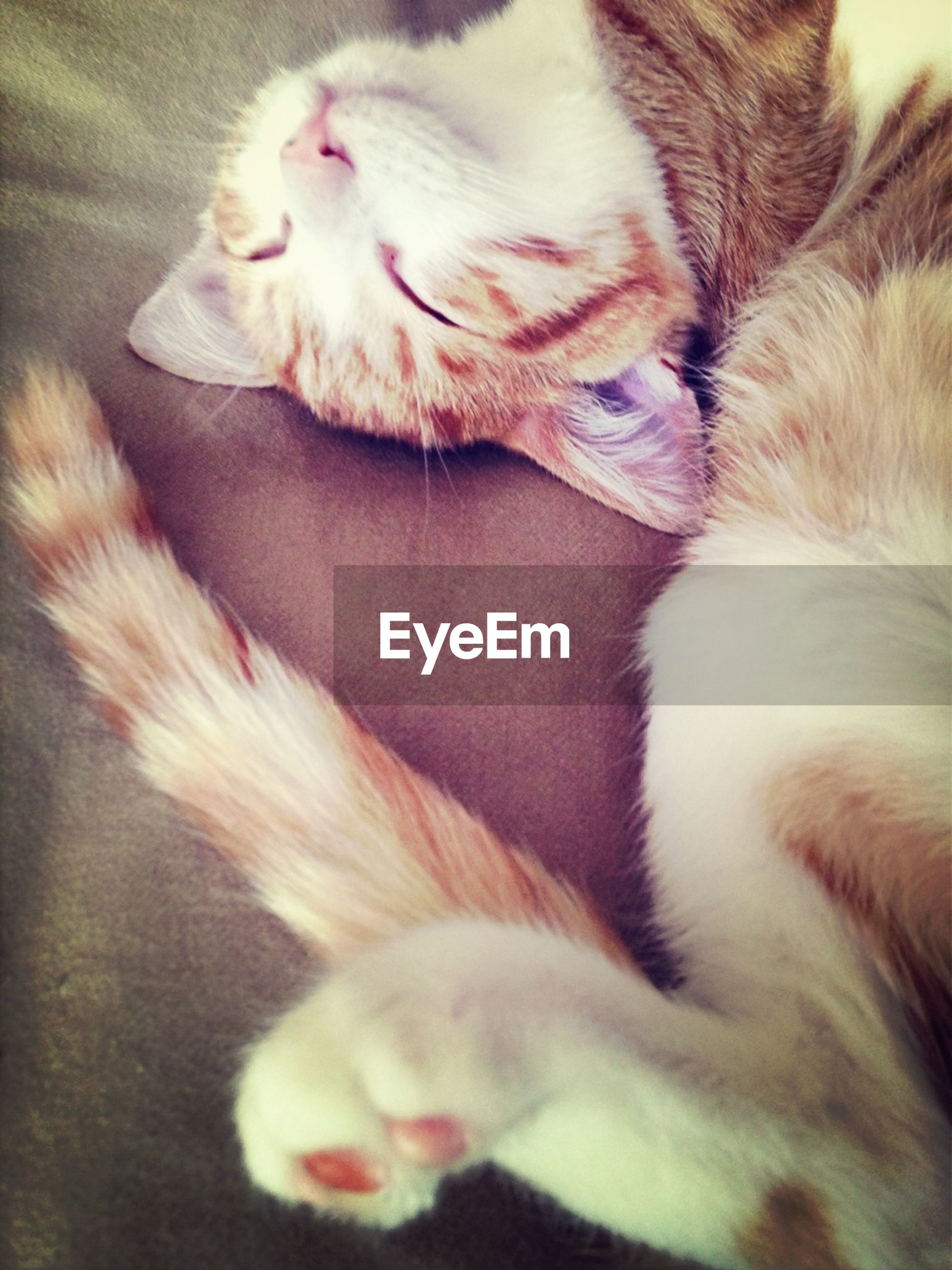 pets, animal themes, domestic animals, mammal, one animal, domestic cat, indoors, sleeping, cat, relaxation, feline, resting, lying down, close-up, whisker, eyes closed, high angle view, bed, comfortable, no people