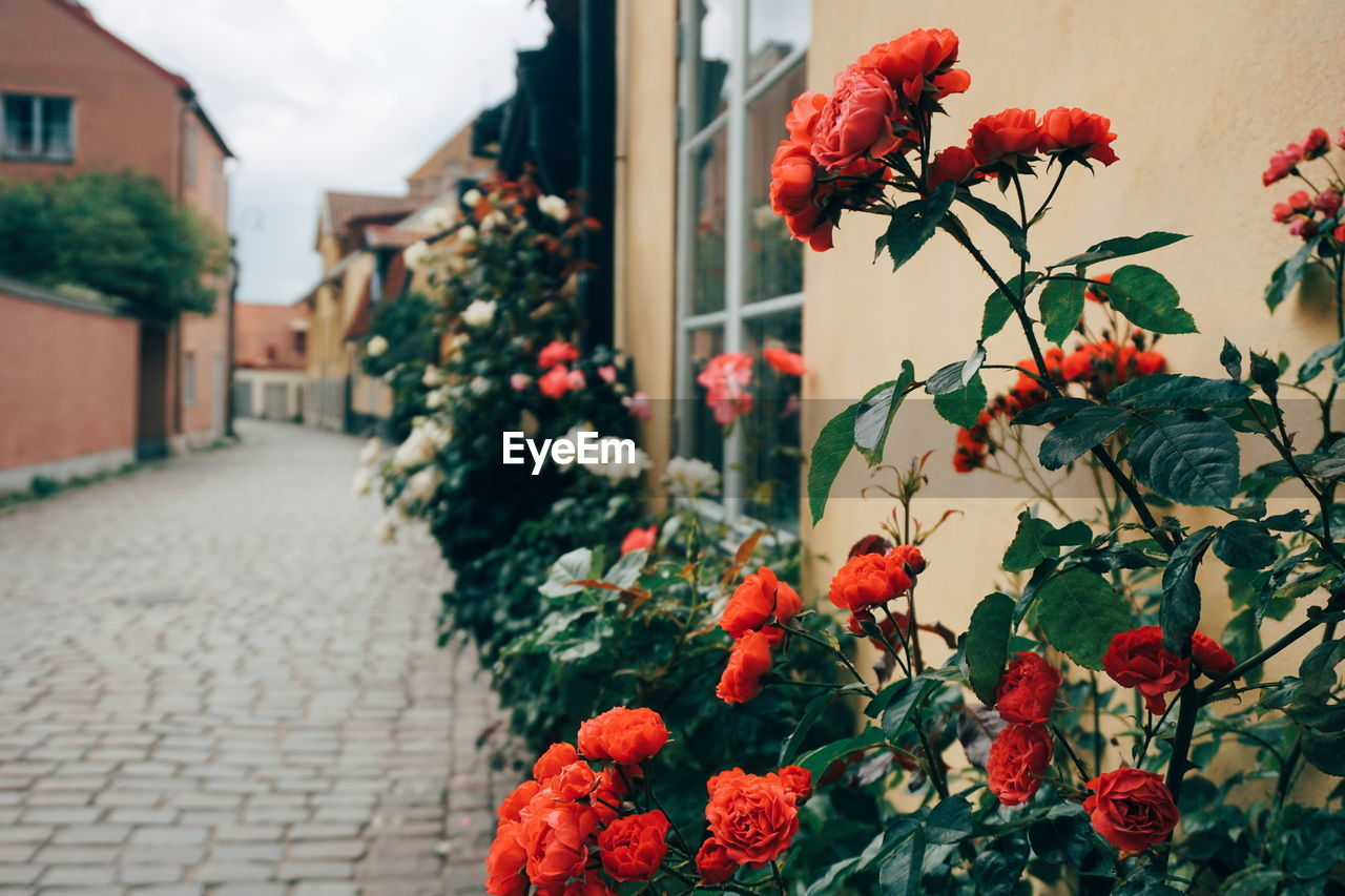 Photo taken in Visby, Sweden