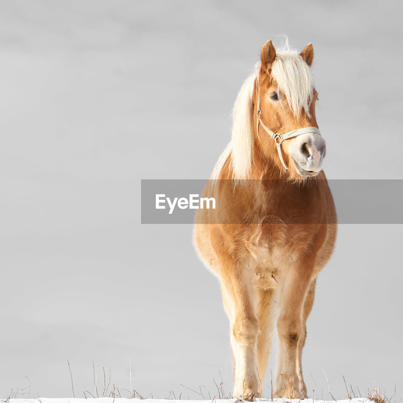 mammal, animal, animal themes, one animal, domestic animals, domestic, pets, vertebrate, livestock, sky, no people, animal wildlife, horse, brown, day, nature, standing, field, cold temperature, copy space