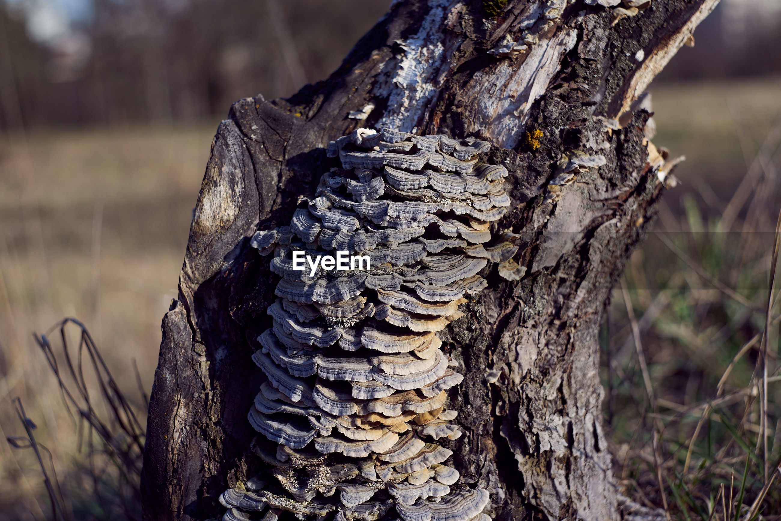 Close-up of tree trunk on field in forest damaged by fungus