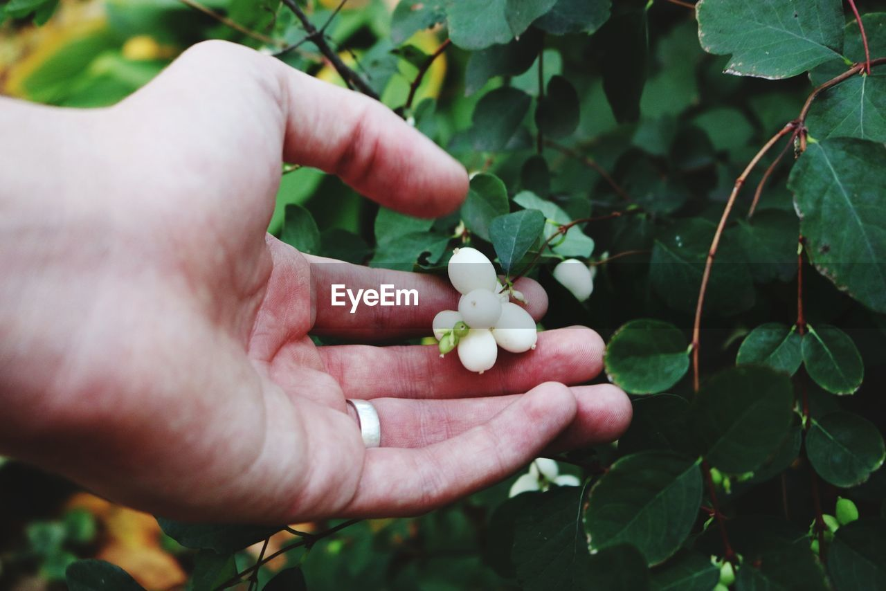 human hand, hand, plant, leaf, holding, growth, freshness, one person, plant part, food, human body part, nature, real people, fruit, healthy eating, food and drink, day, green color, close-up, outdoors, finger, ripe