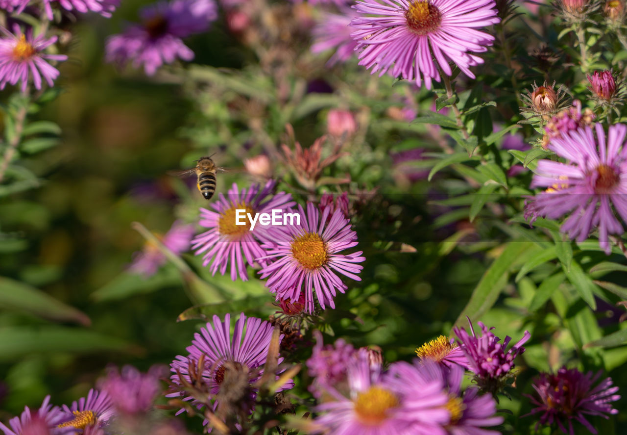 flowering plant, flower, fragility, freshness, plant, vulnerability, beauty in nature, petal, growth, flower head, inflorescence, purple, close-up, pink color, nature, no people, day, invertebrate, insect, animals in the wild, pollen, pollination, outdoors