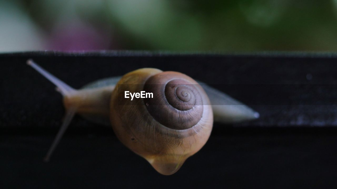 Close-up high angle view of snail