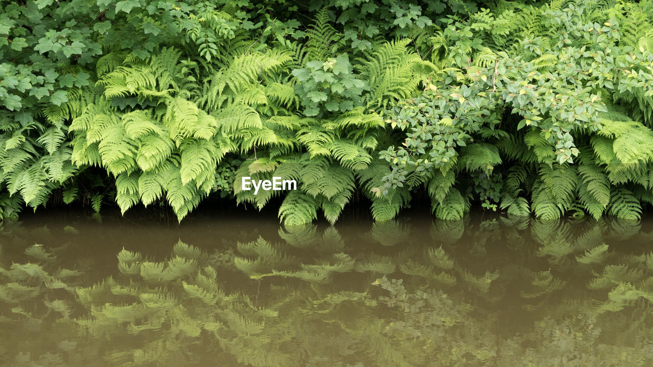 PLANTS GROWING ON RIVERBANK