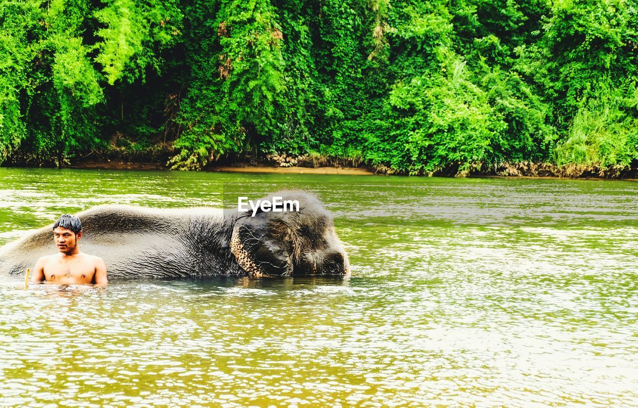 one animal, domestic animals, water, tree, waterfront, animal themes, mammal, growth, nature, outdoors, day, pets, side view, dog, lake, full length, beauty in nature, no people