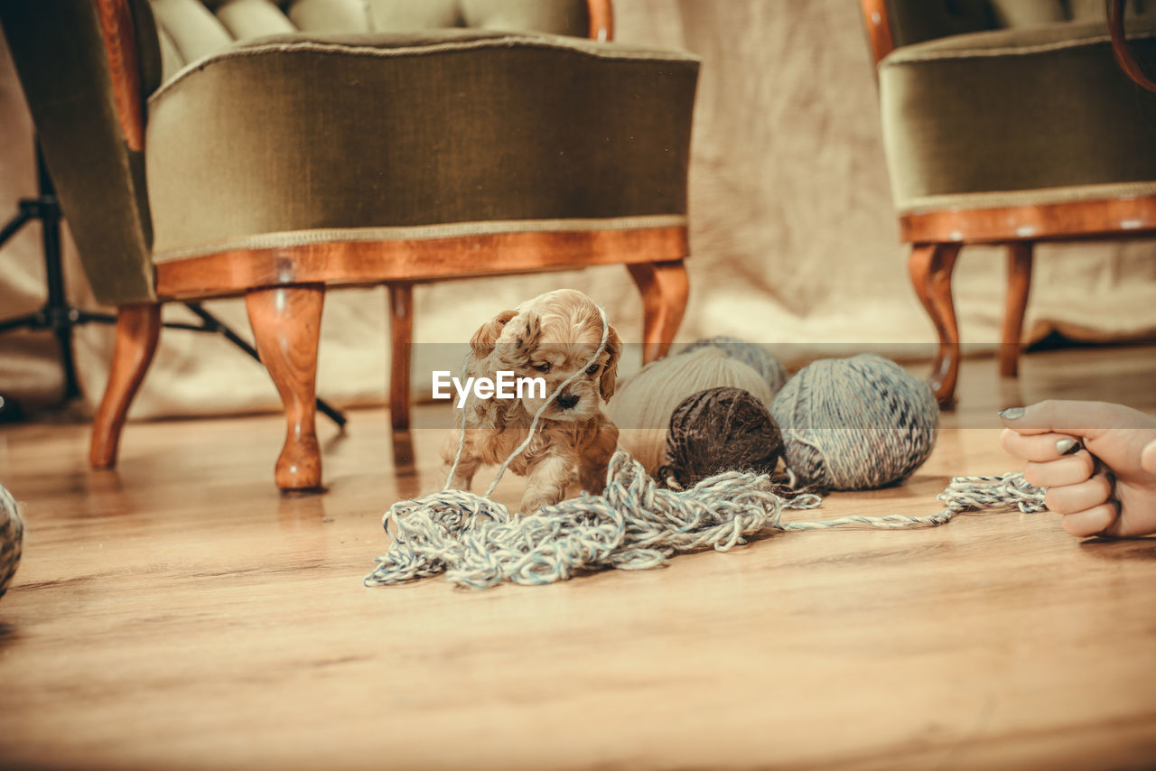 wood - material, indoors, selective focus, art and craft, table, seat, craft, human body part, textile, wool, ball of wool, chair, body part, sitting, low section, human hand, home interior, material, still life