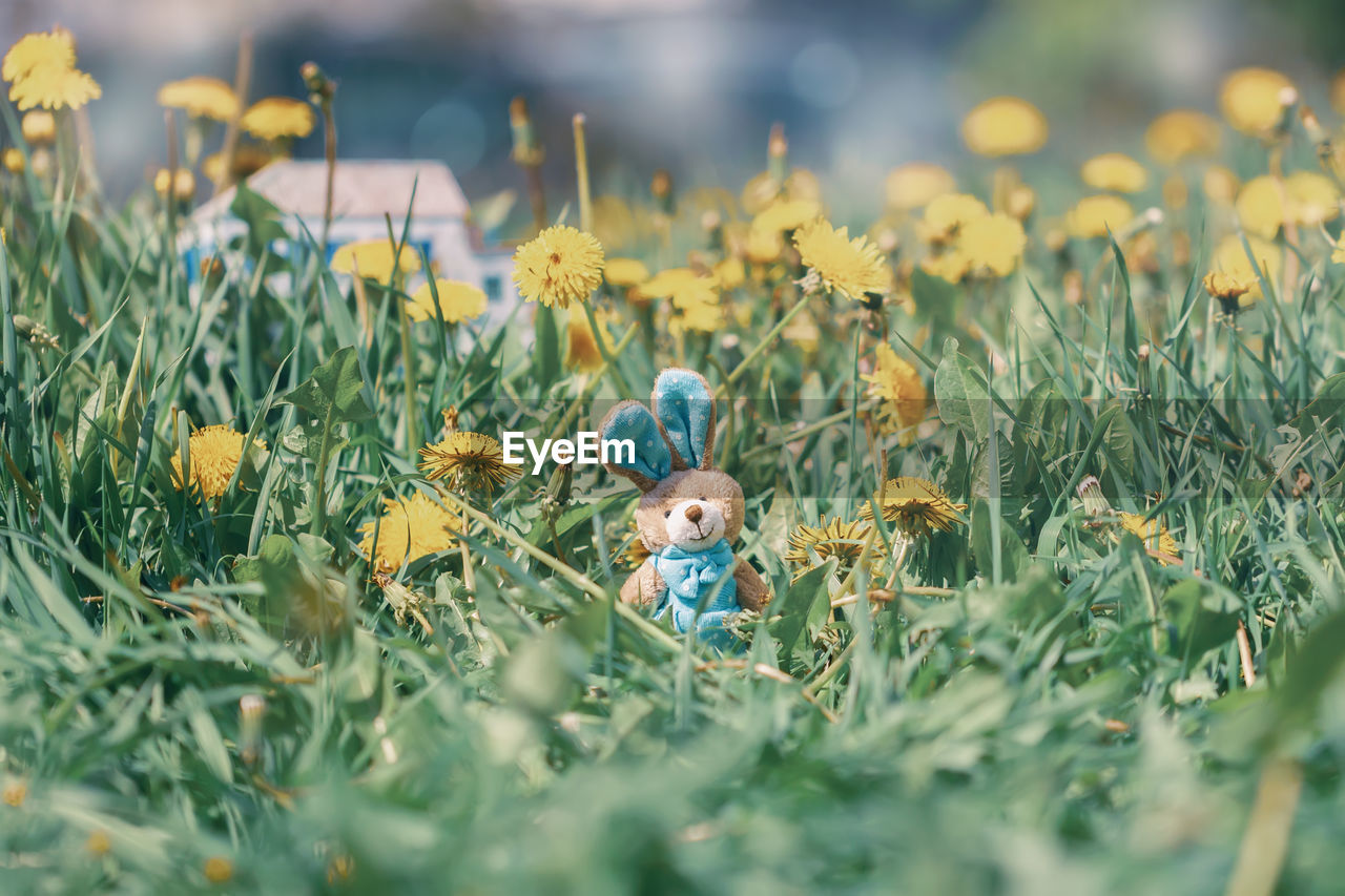 plant, representation, toy, selective focus, field, human representation, flower, flowering plant, nature, grass, growth, land, no people, yellow, day, close-up, art and craft, outdoors, flower head