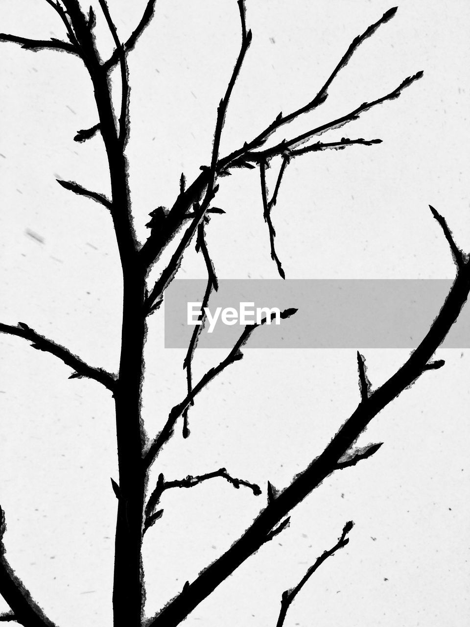 nature, branch, no people, outdoors, day, beauty in nature, cold temperature, snow, growth, winter, tree, bare tree, close-up, clear sky, sky, freshness
