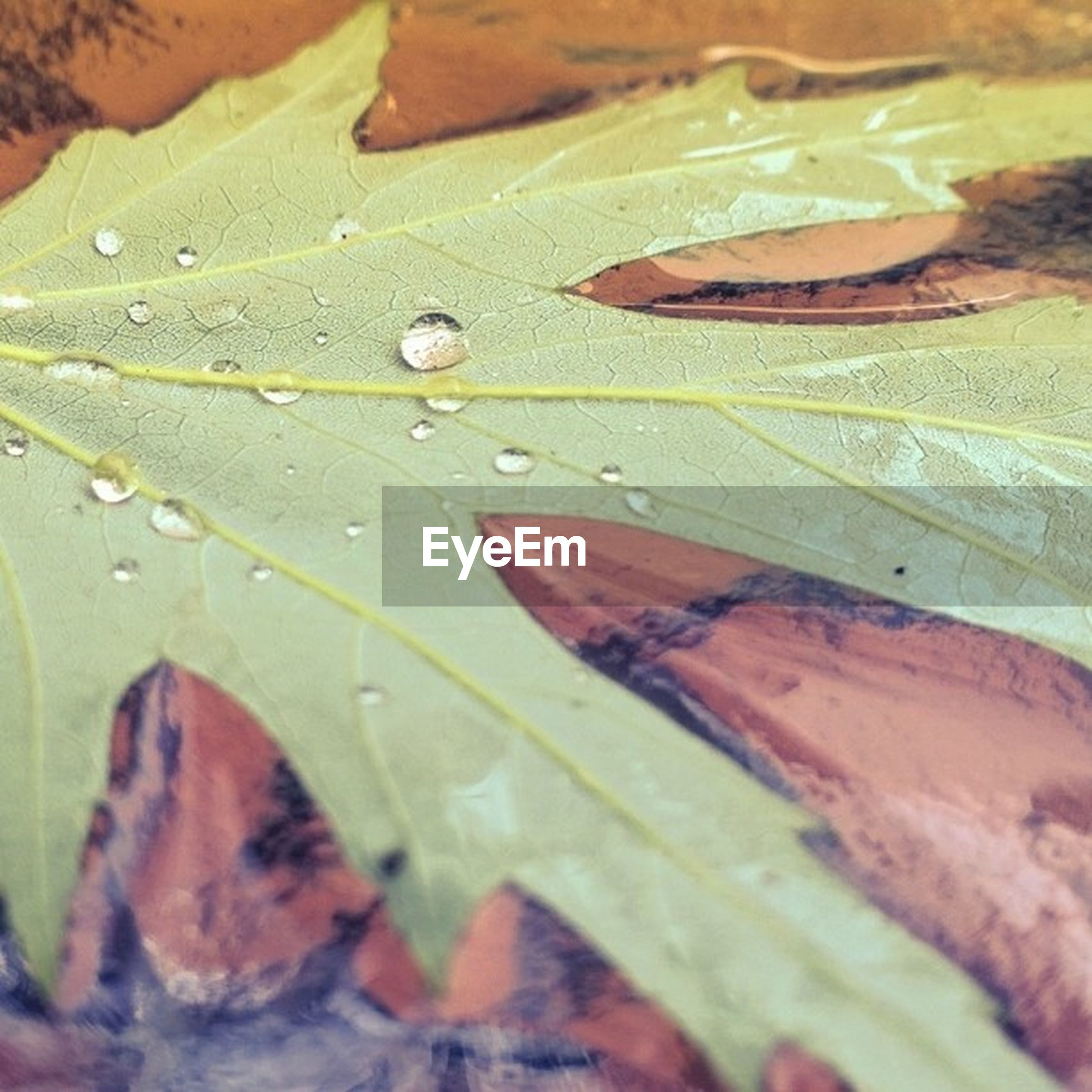 leaf, close-up, leaf vein, green color, textured, full frame, backgrounds, pattern, natural pattern, selective focus, no people, high angle view, nature, detail, leaves, freshness, day, outdoors, focus on foreground, multi colored