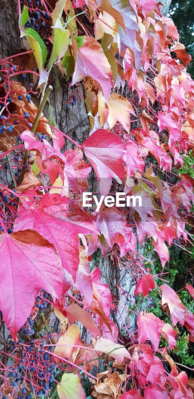 autumn, leaf, plant part, beauty in nature, leaves, nature, day, plant, no people, change, fragility, close-up, high angle view, vulnerability, dry, abundance, full frame, field, outdoors, falling, natural condition, maple leaf, fall