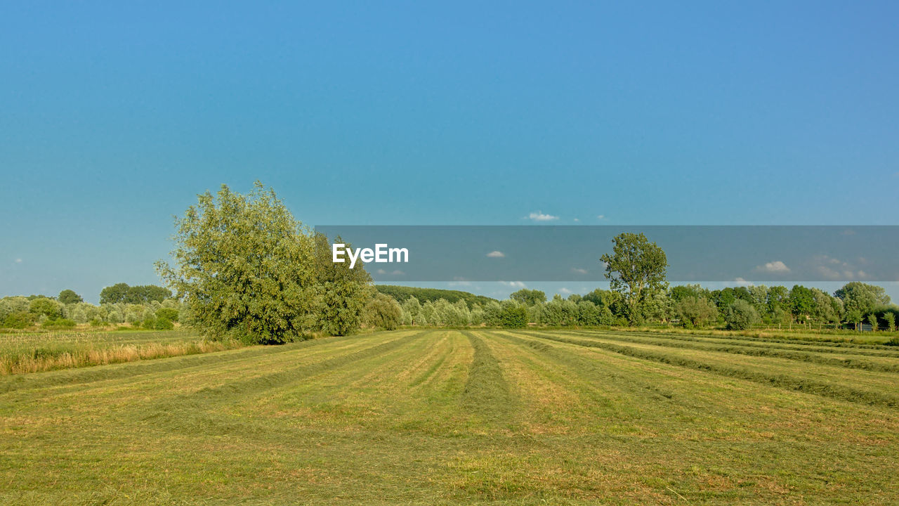 plant, field, landscape, sky, land, environment, tree, tranquil scene, beauty in nature, tranquility, scenics - nature, nature, copy space, growth, green color, day, no people, grass, clear sky, rural scene, outdoors