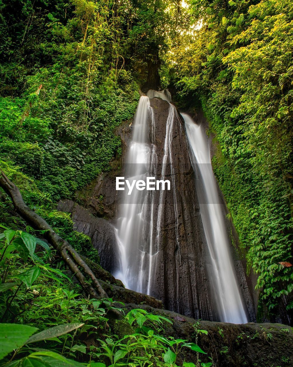 plant, tree, forest, long exposure, scenics - nature, motion, waterfall, land, beauty in nature, growth, green color, blurred motion, nature, water, lush foliage, no people, foliage, rainforest, flowing water, environment, outdoors, flowing, woodland, power in nature, falling water