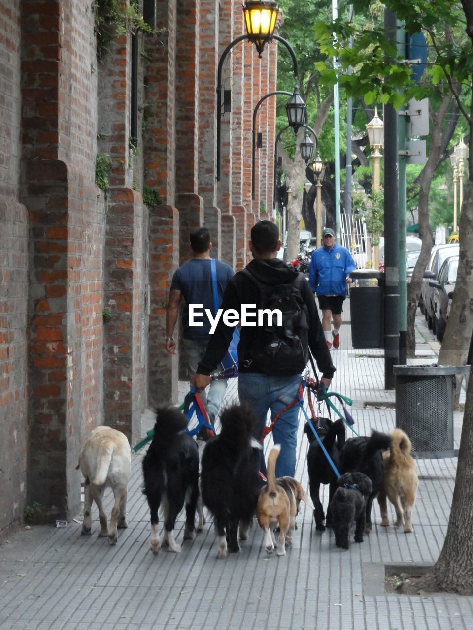 dog, real people, pets, domestic animals, walking, one animal, mammal, men, one person, outdoors, full length, day, lifestyles, rear view, built structure, leisure activity, architecture, building exterior, one man only, city, adult, only men, people, adults only