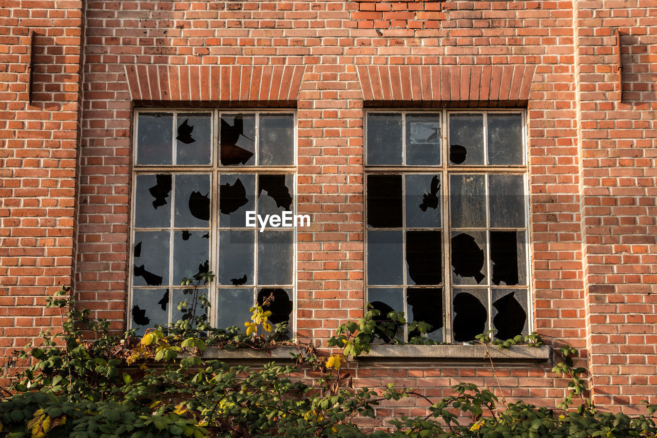 building exterior, architecture, window, brick, built structure, brick wall, wall, day, building, flower, plant, flowering plant, outdoors, no people, nature, wall - building feature, mammal