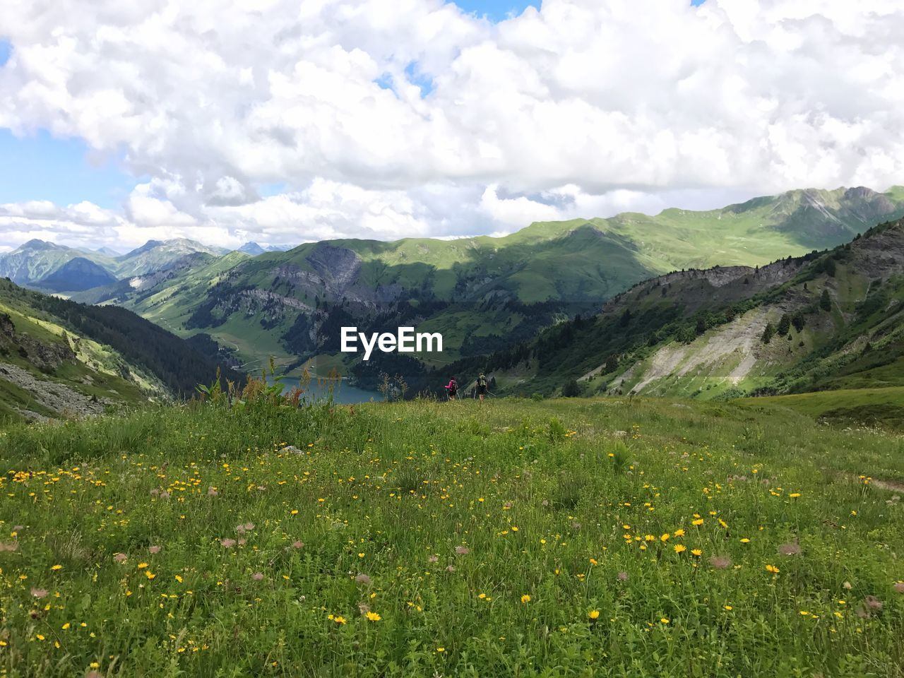 mountain, nature, beauty in nature, sky, landscape, scenery, day, wilderness, meadow, vegetation, travel, outdoors, peak, scenics, hiking, no people, flower, grass, freshness, range