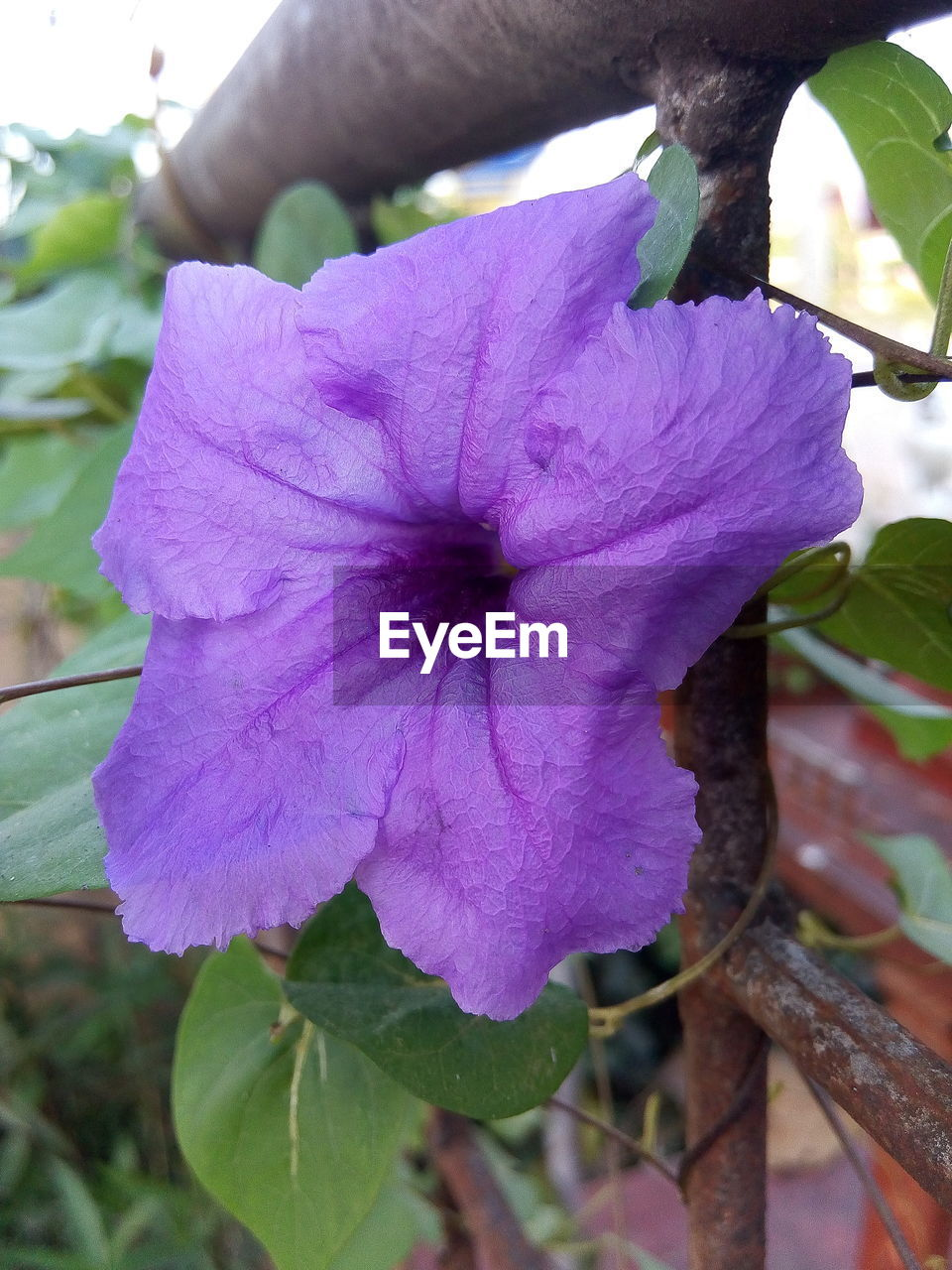 Close-Up Of Purple Flower Blooming In Garden