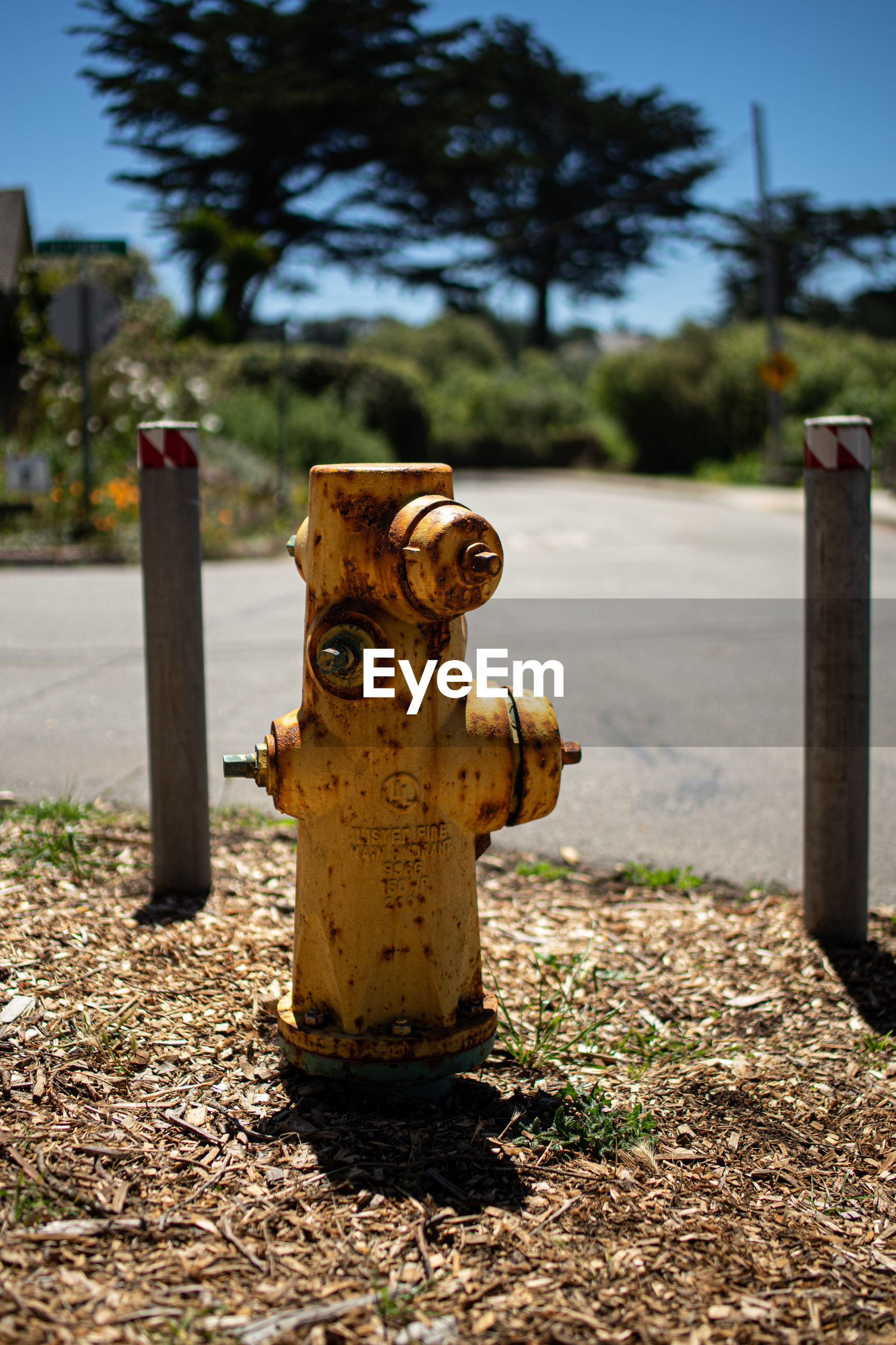 CLOSE-UP OF FIRE HYDRANT ON WOODEN POST IN FIELD