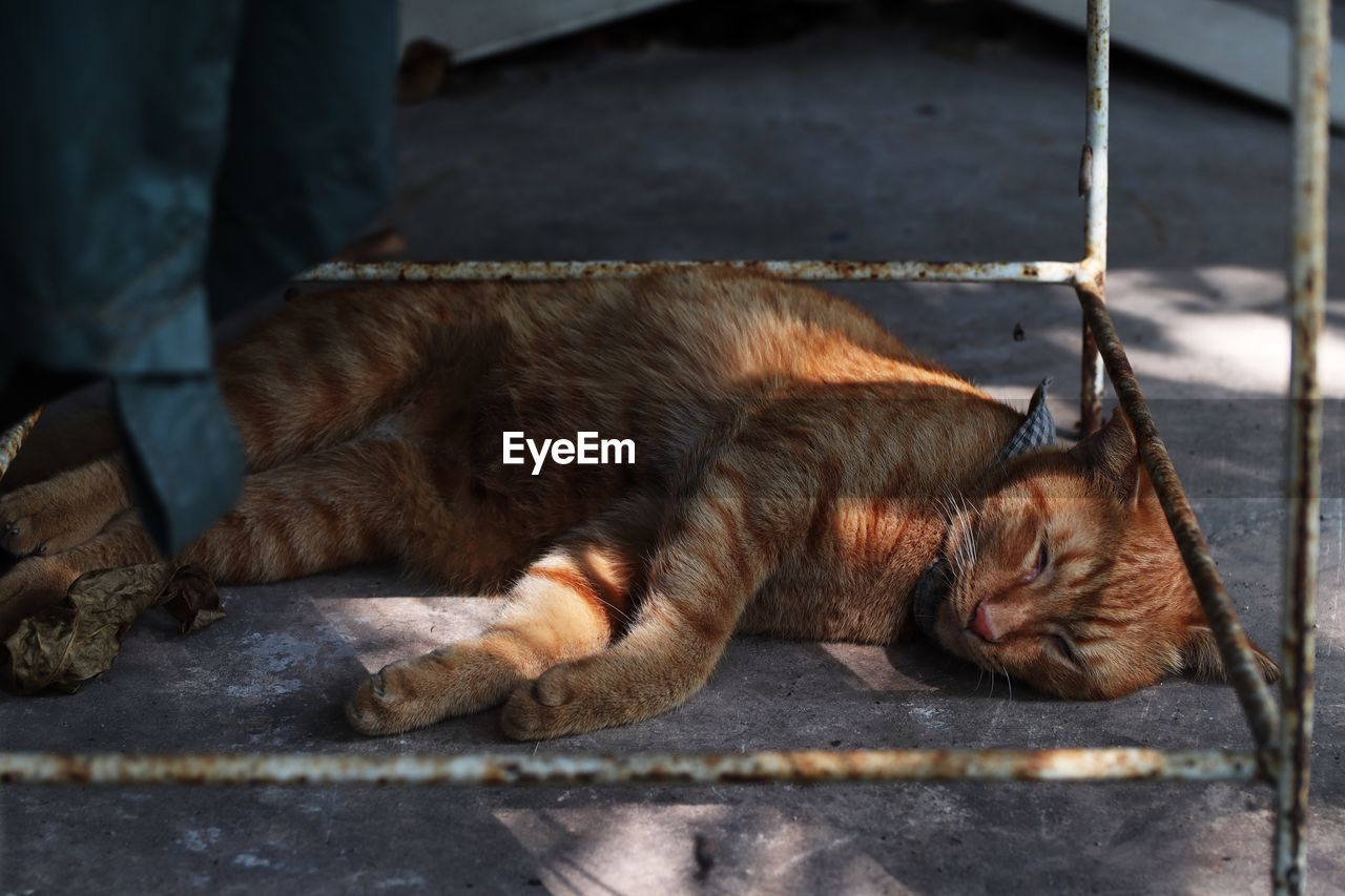 pets, domestic, mammal, relaxation, animal, one animal, domestic animals, animal themes, feline, cat, vertebrate, sleeping, lying down, resting, no people, domestic cat, eyes closed, footpath, close-up, day, whisker, ginger cat, napping