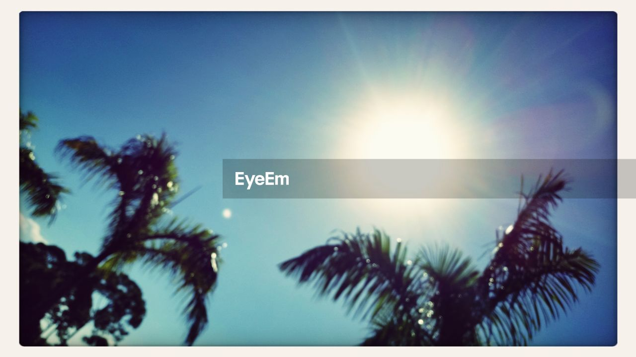 low angle view, sun, nature, sunlight, clear sky, no people, sky, outdoors, beauty in nature, growth, palm tree, day, close-up, freshness