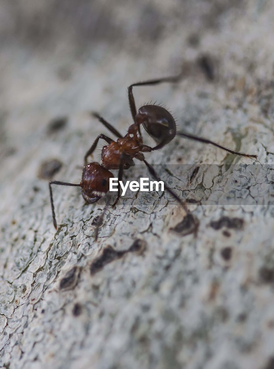 invertebrate, insect, animal, animal themes, animals in the wild, animal wildlife, one animal, selective focus, close-up, no people, zoology, animal body part, ant, nature, day, outdoors, full length, arthropod, animal antenna
