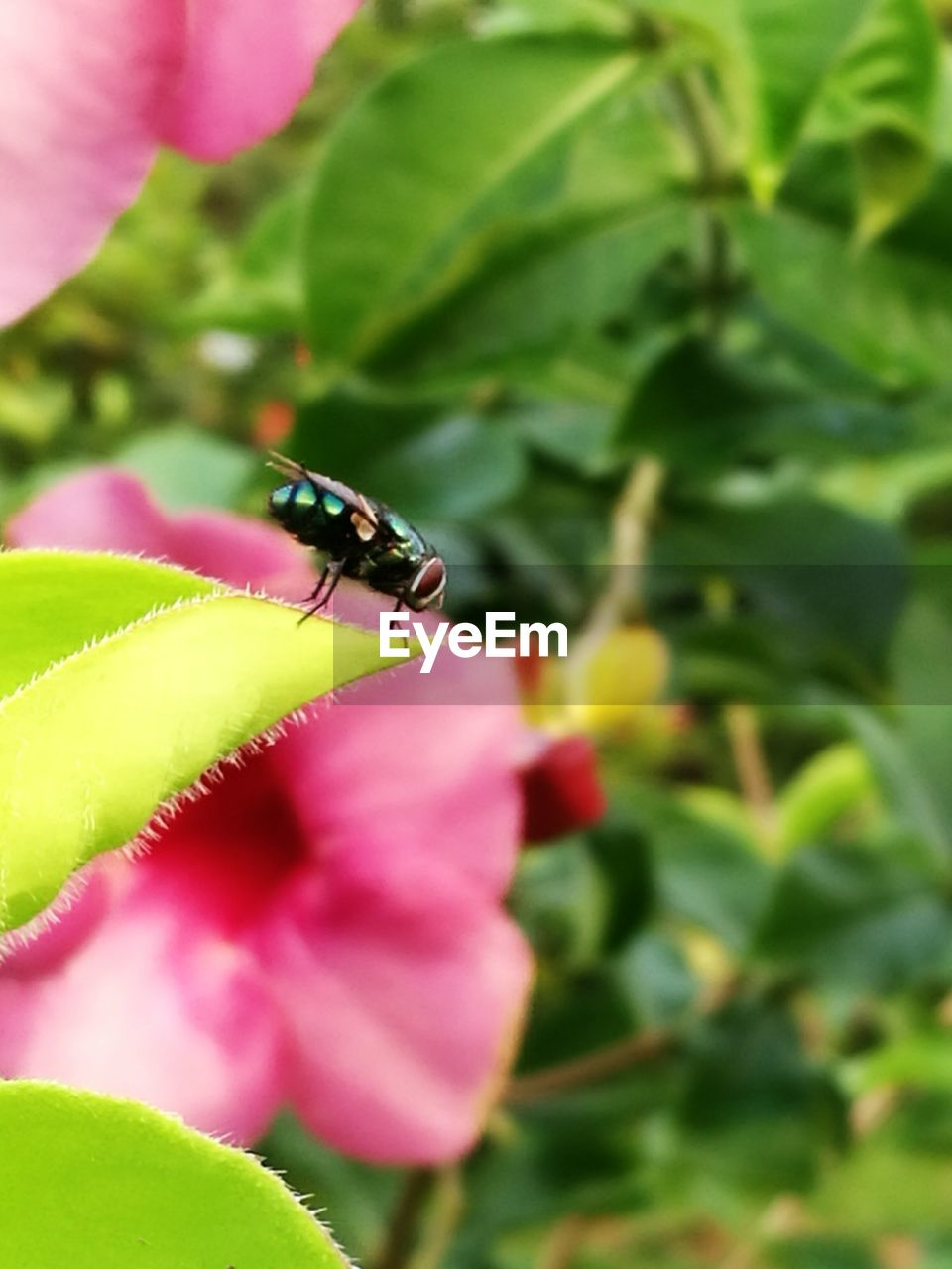 insect, one animal, animals in the wild, animal themes, green color, leaf, nature, close-up, growth, plant, animal wildlife, outdoors, day, beauty in nature, focus on foreground, flower, no people, fragility, freshness, flower head
