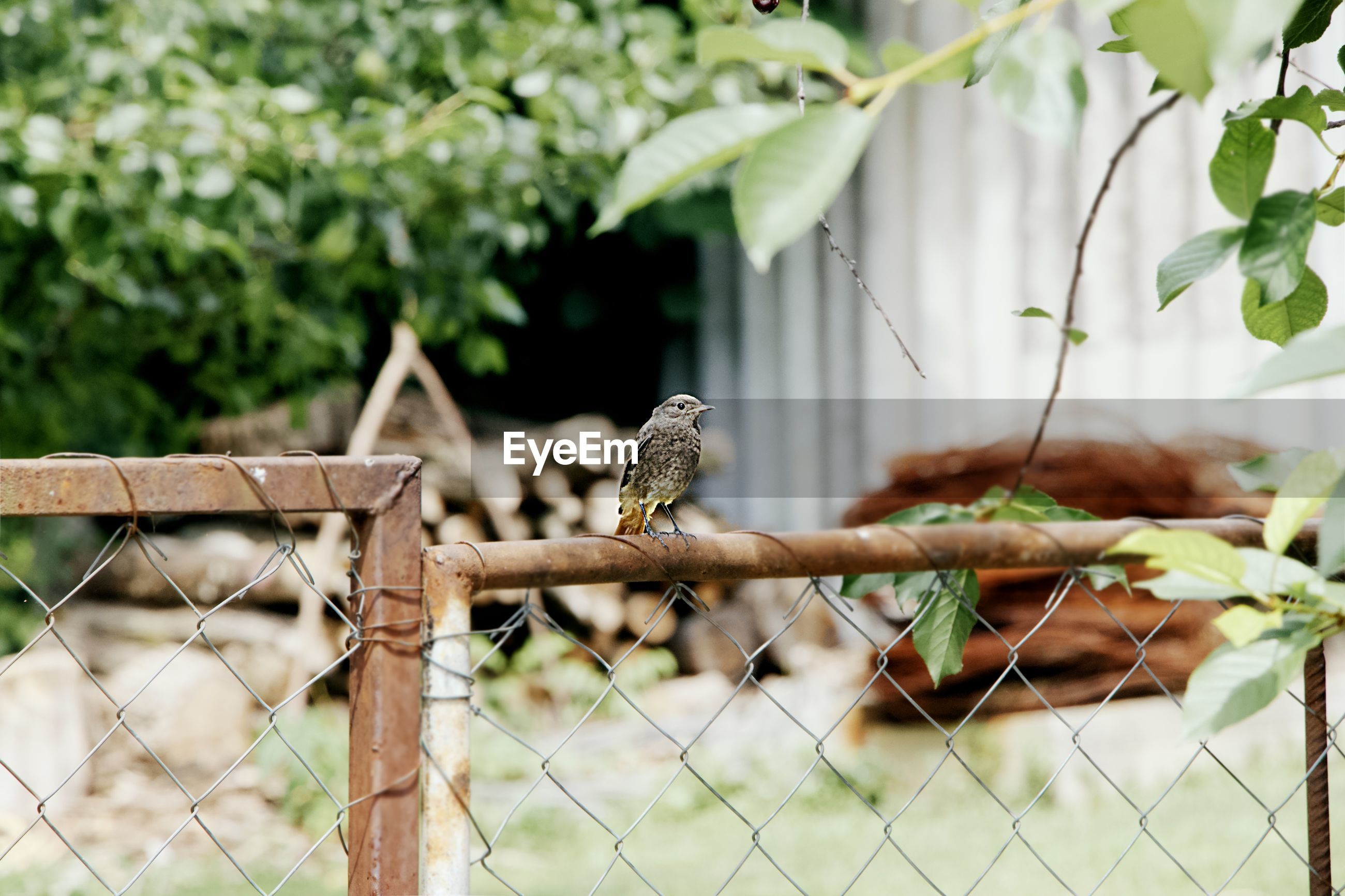 VIEW OF BIRD PERCHING ON FENCE