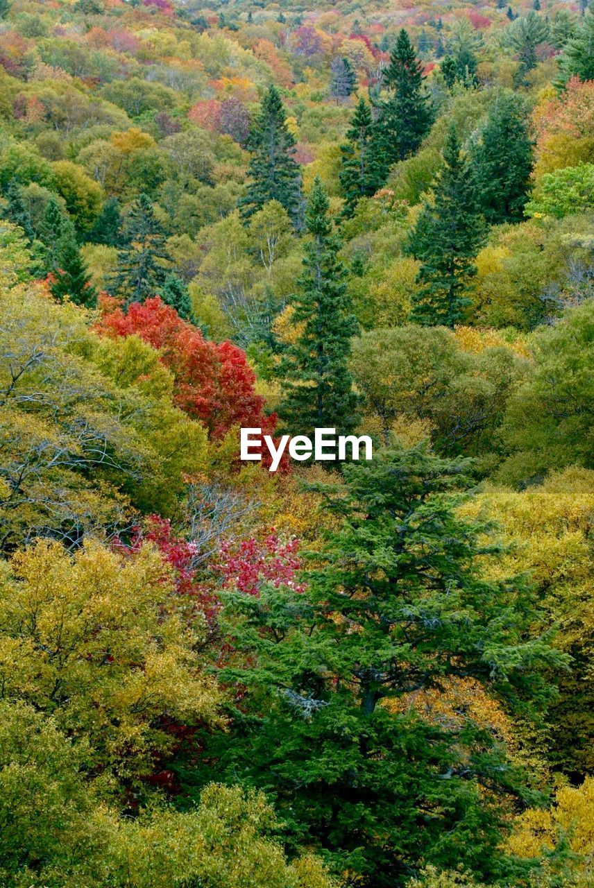 tree, autumn, forest, nature, leaf, lush foliage, scenics, green color, no people, growth, day, tranquil scene, beauty in nature, plant, multi colored, landscape, outdoors, mountain