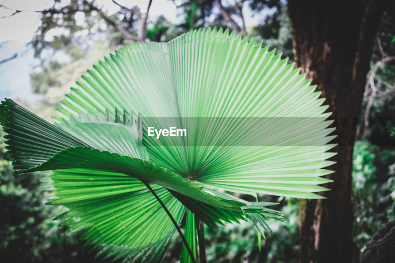 plant, green color, growth, tree, leaf, focus on foreground, plant part, nature, day, beauty in nature, no people, close-up, outdoors, palm tree, freshness, palm leaf, natural pattern, tropical climate, pattern, frond, leaves