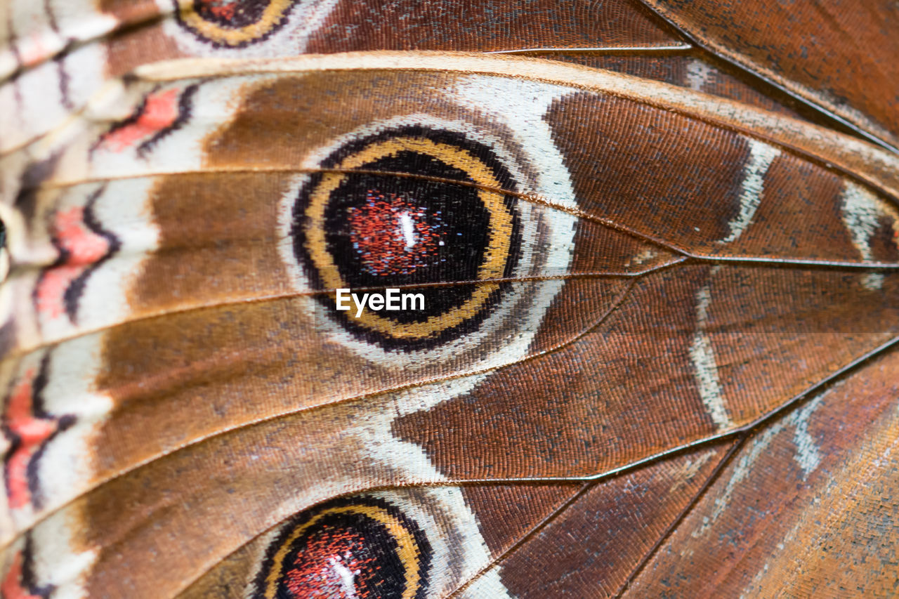 animal themes, animal, animal body part, full frame, animal wildlife, close-up, one animal, extreme close-up, backgrounds, no people, animals in the wild, animal wing, macro, natural pattern, insect, invertebrate, animal markings, pattern, multi colored, butterfly - insect, animal eye
